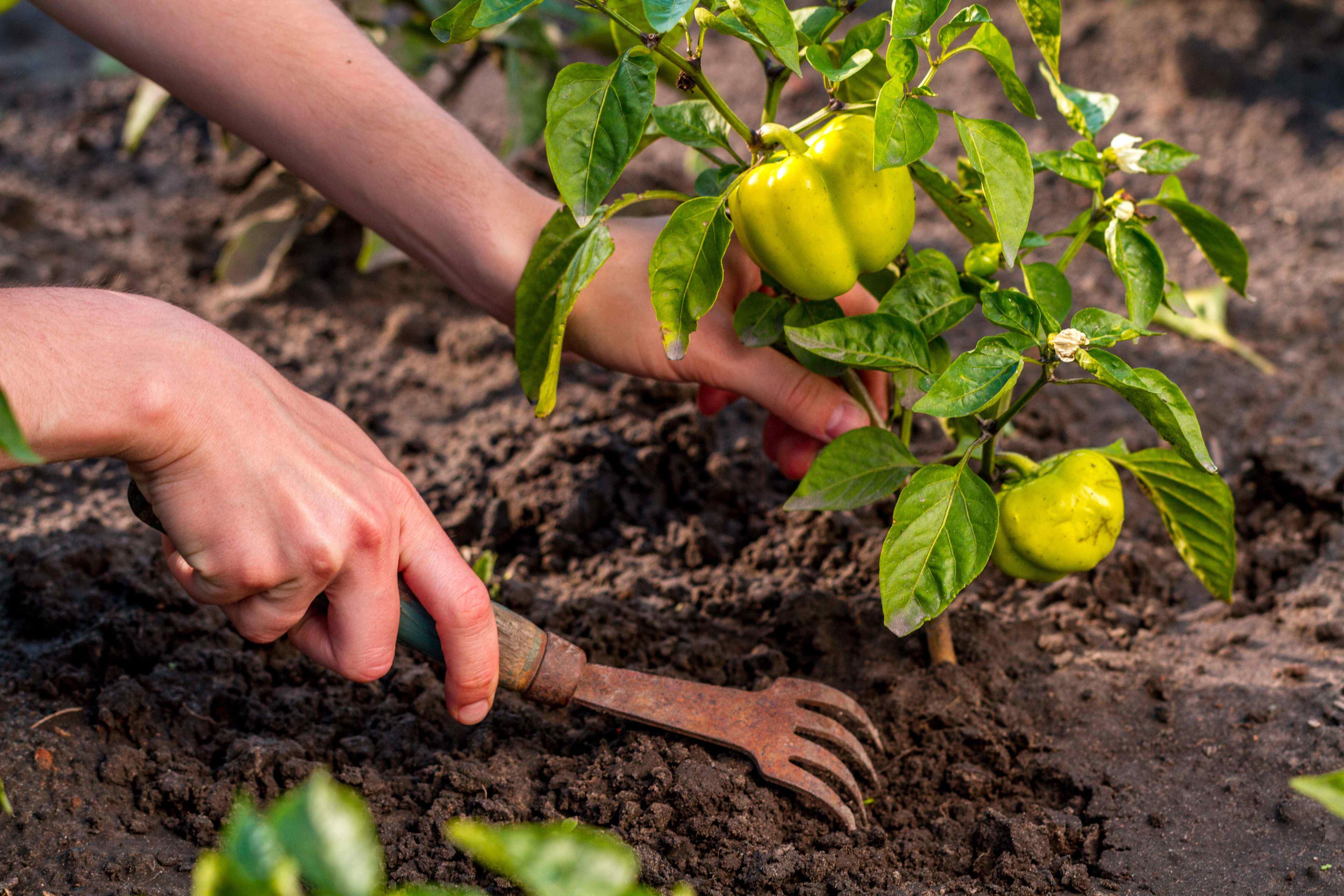 Qué sembrar y plantar en tu jardín en julio