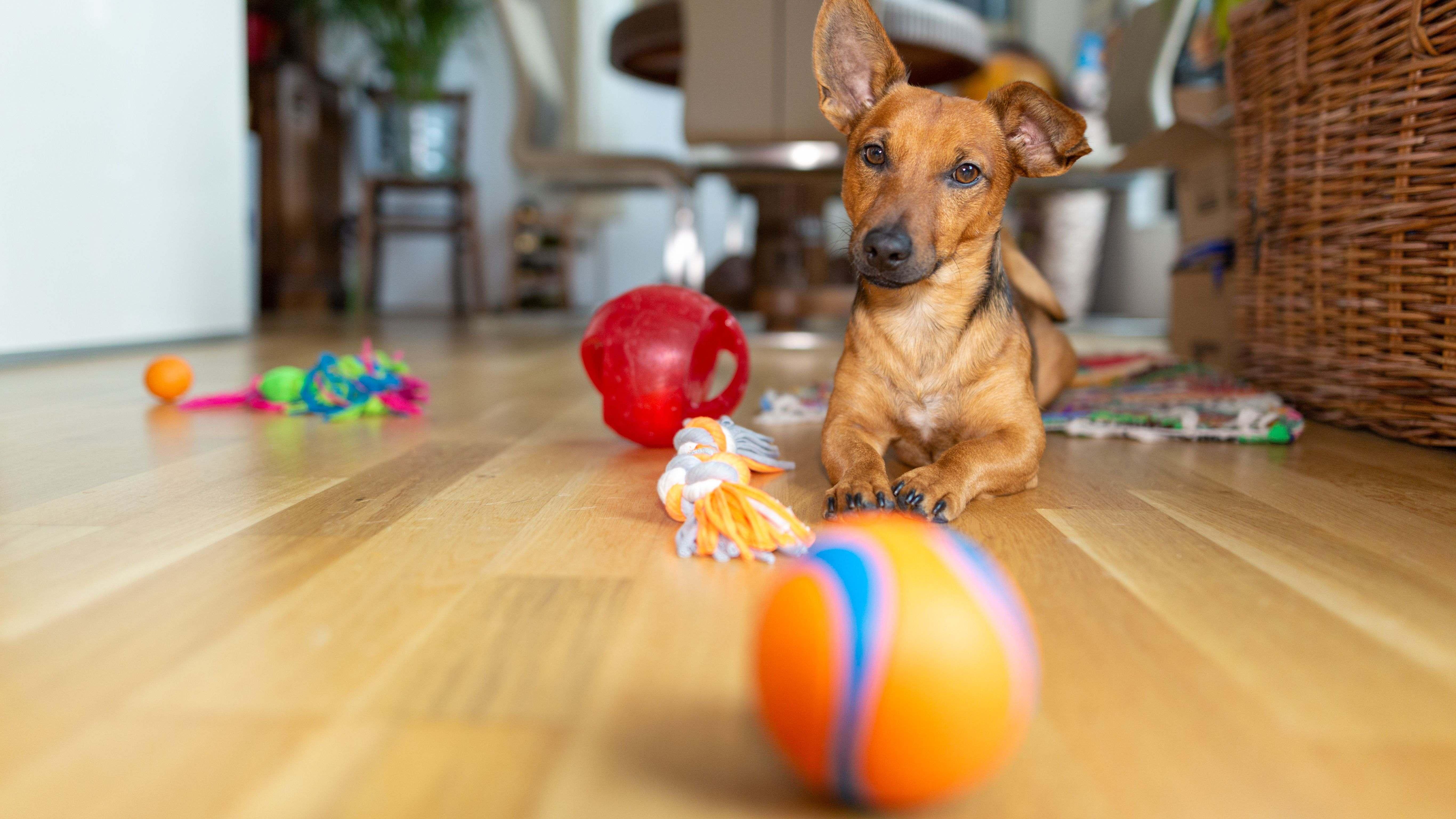 Cómo elegir un juguete para tu perro