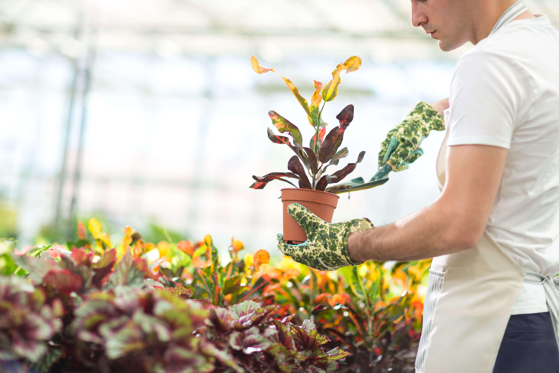 Arbres Et Arbustes Pour Balcons Et Terrasses Comment Choisir