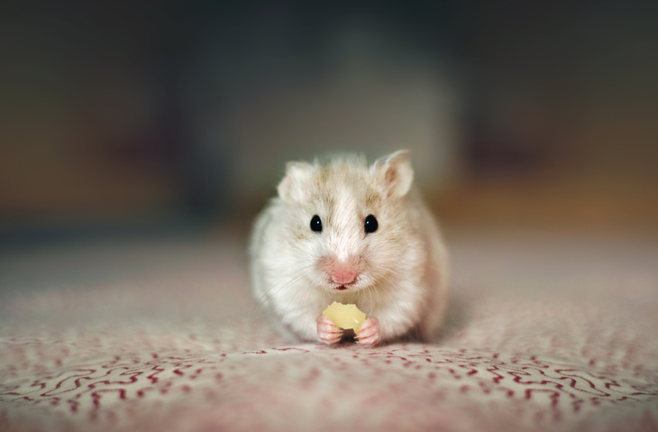 How to care for your hamster