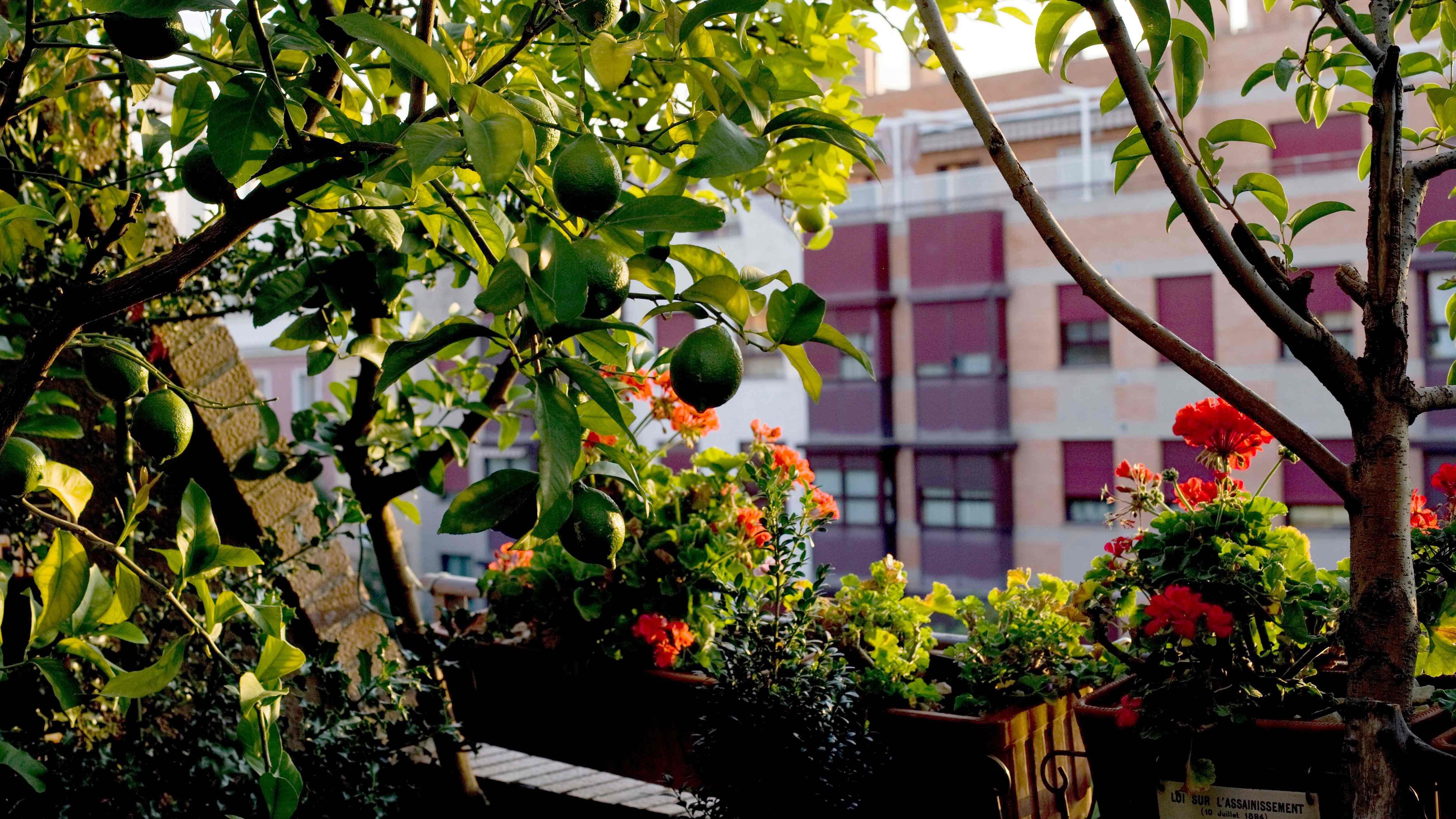 Come scegliere alberi e arbusti per balconi e terrazzi
