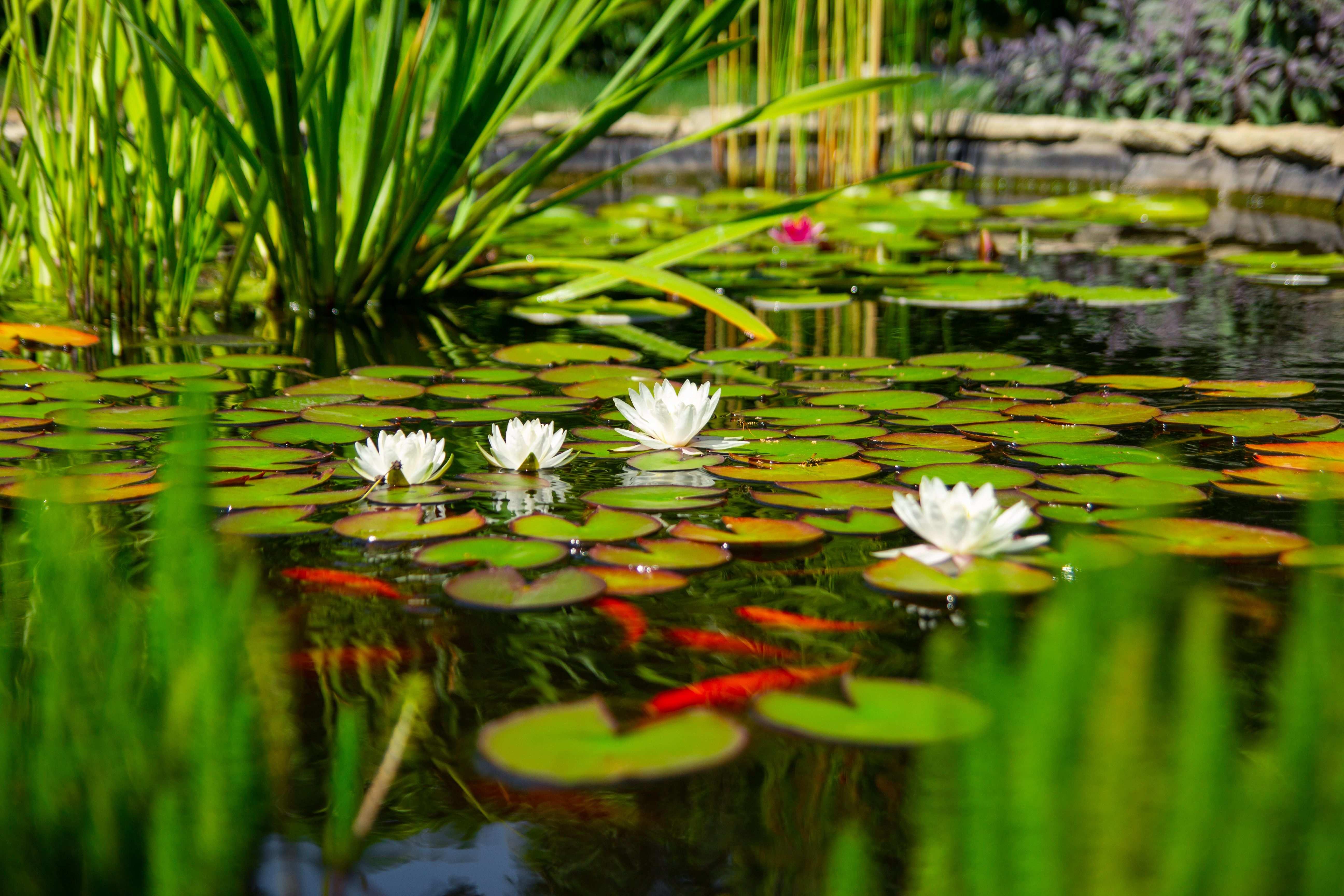 Quelles sont les plantes de bassin
