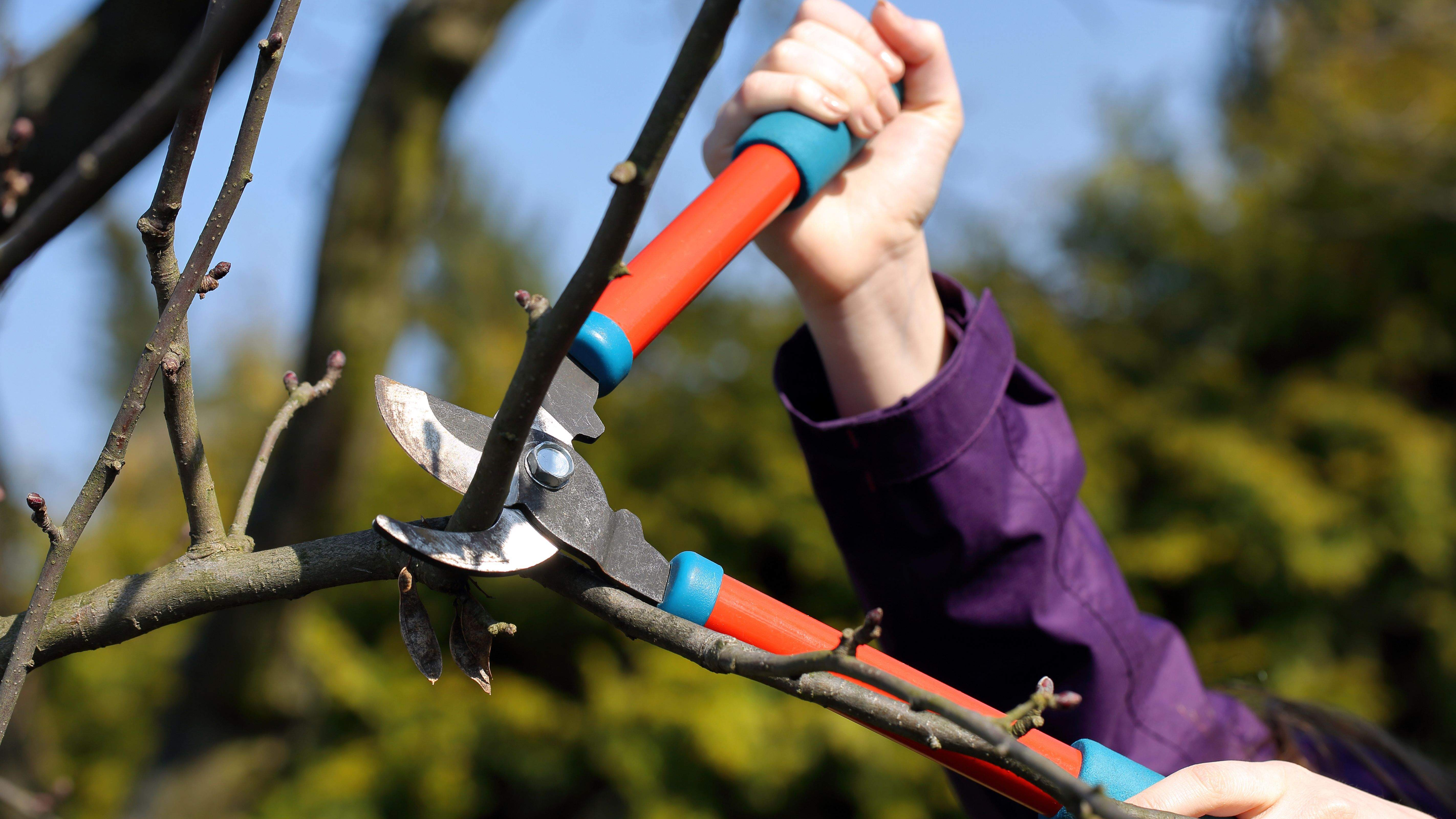 Cómo elegir herramientas de mano para podar ramas y arbustos