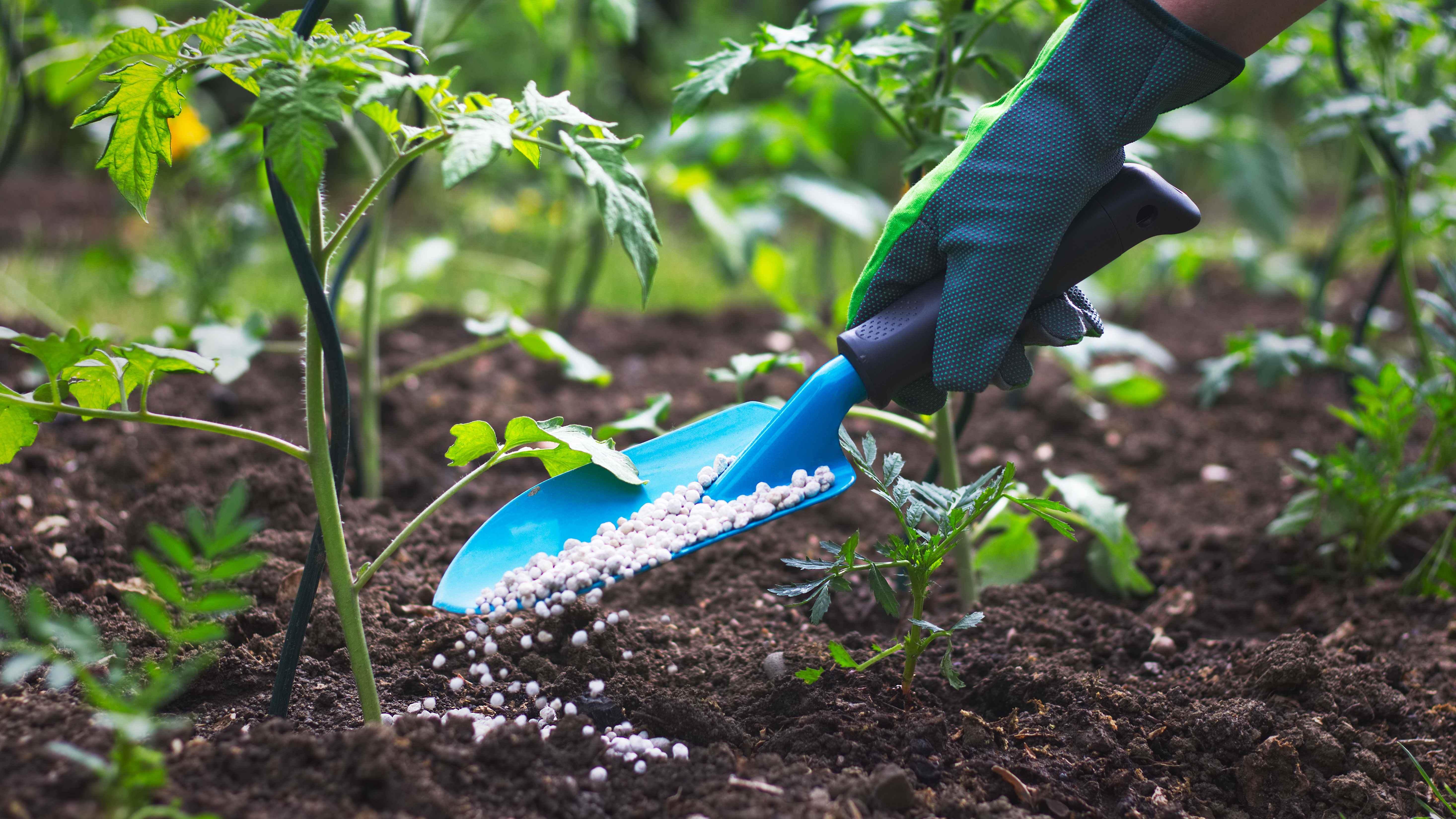 Engrais pour plante : bien choisir