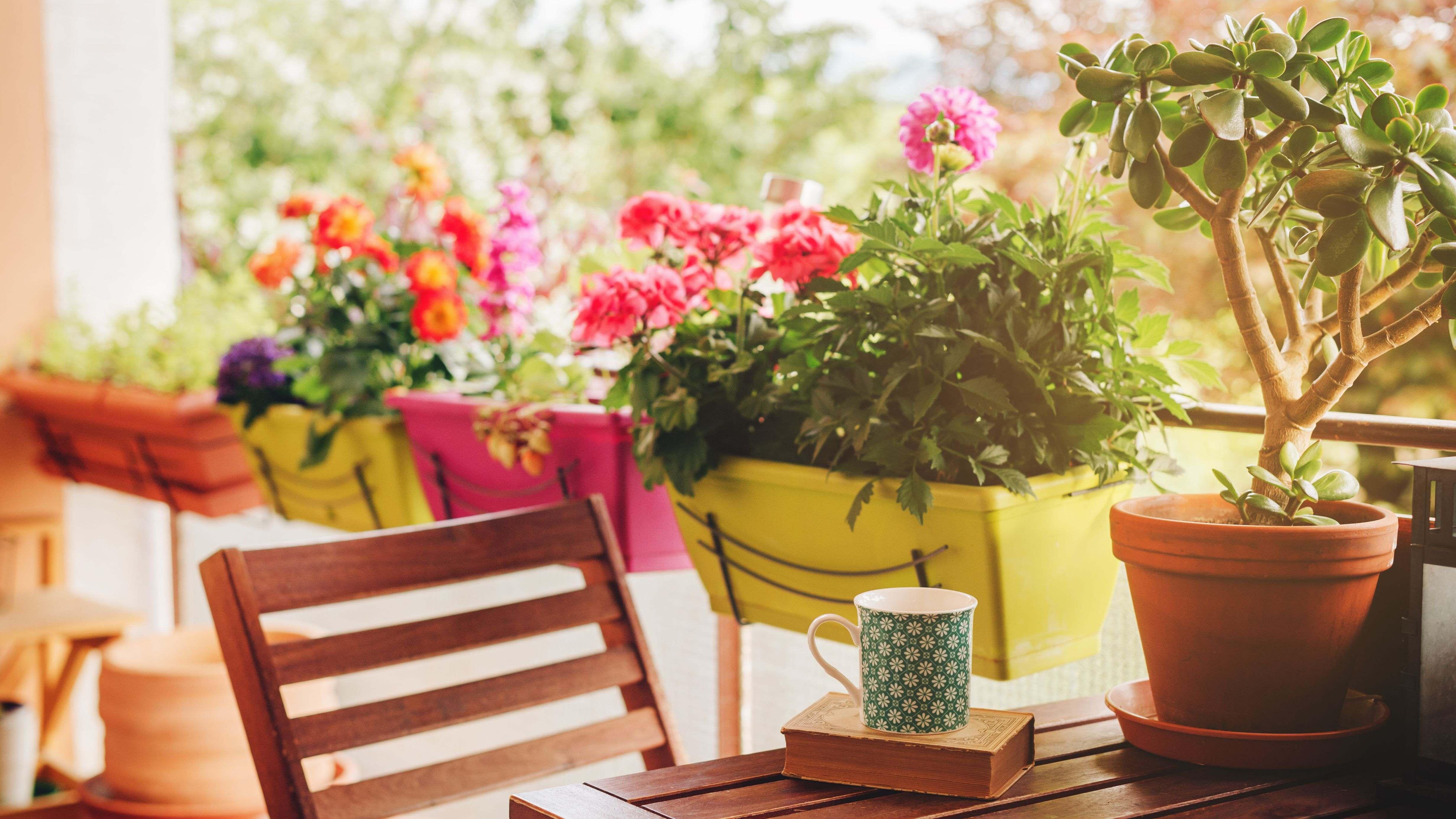 Cómo elegir plantas vivaces para balcón y terraza