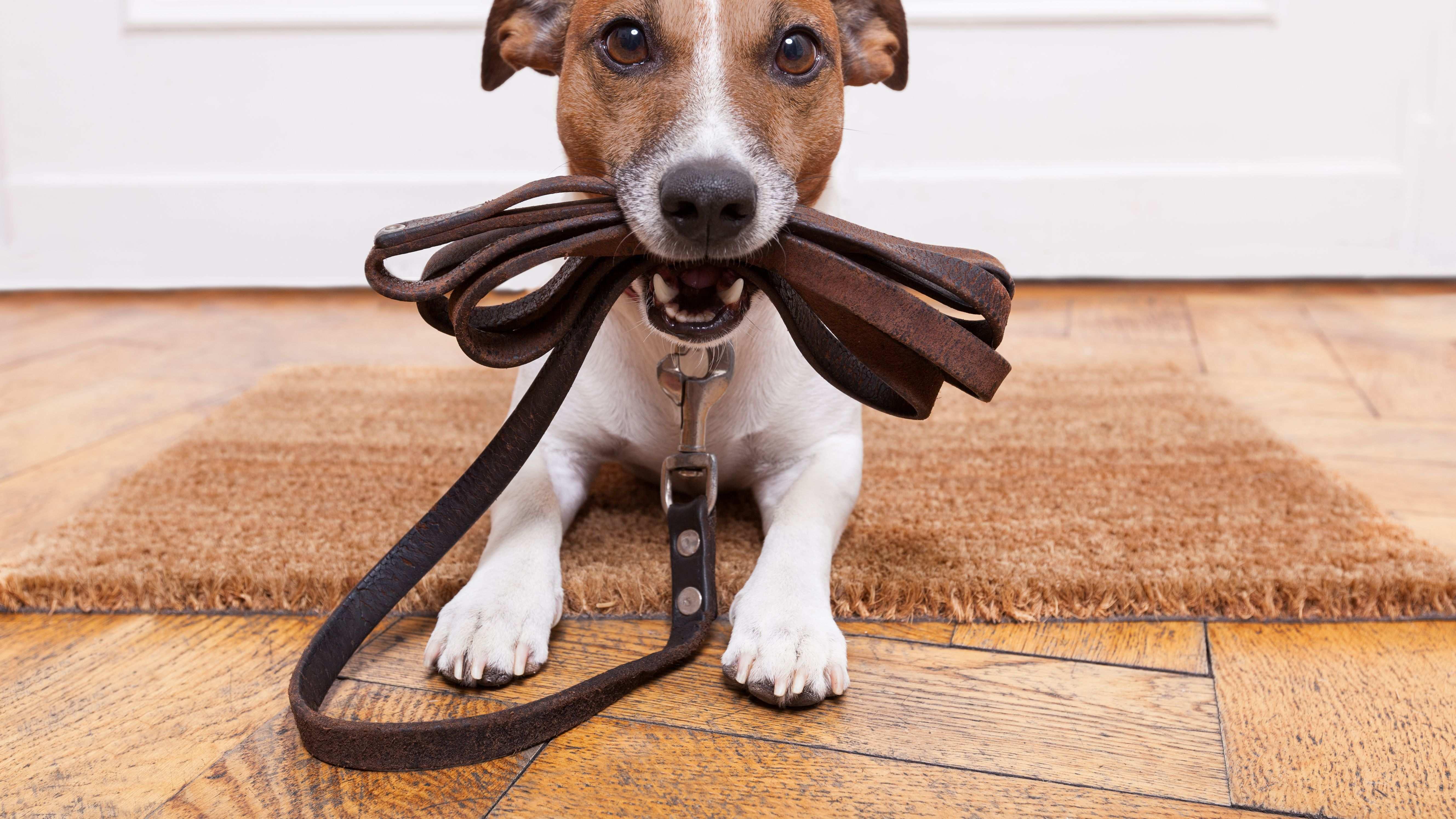 Laisse pour chien :  comment choisir