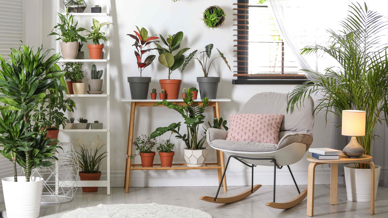 Die 10 besten Zimmerpflanzen