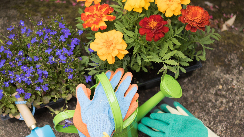 Qué  flores sembrar o plantar en abril