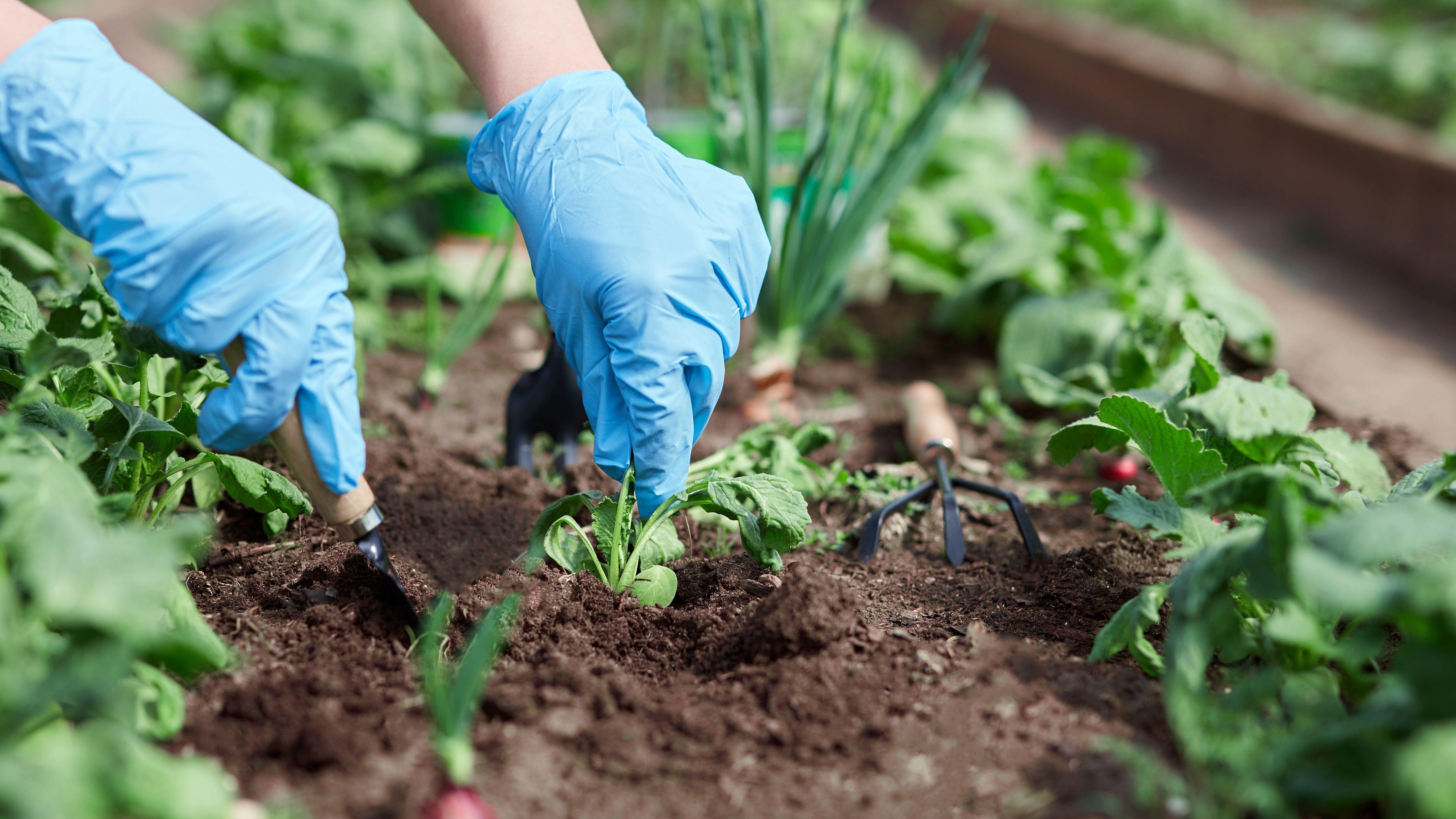 Qué  verduras y hortalizas plantar en abril