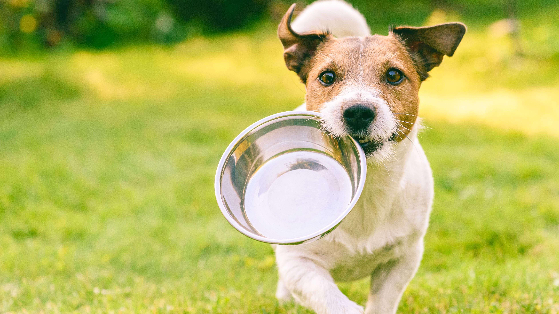 ¿Cómo elegir un comedero para perros?