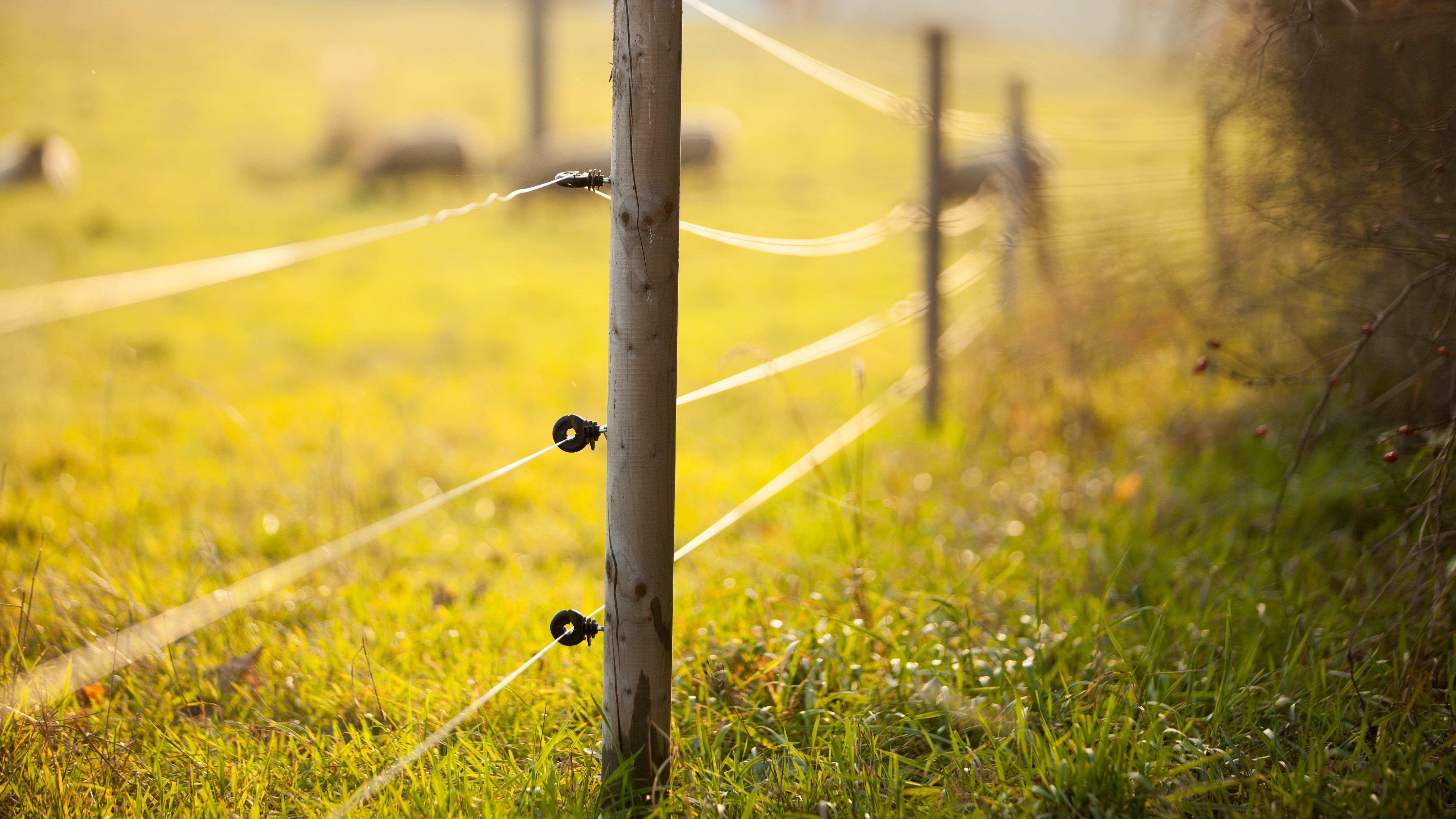 Comment choisir une clôture électrique ?