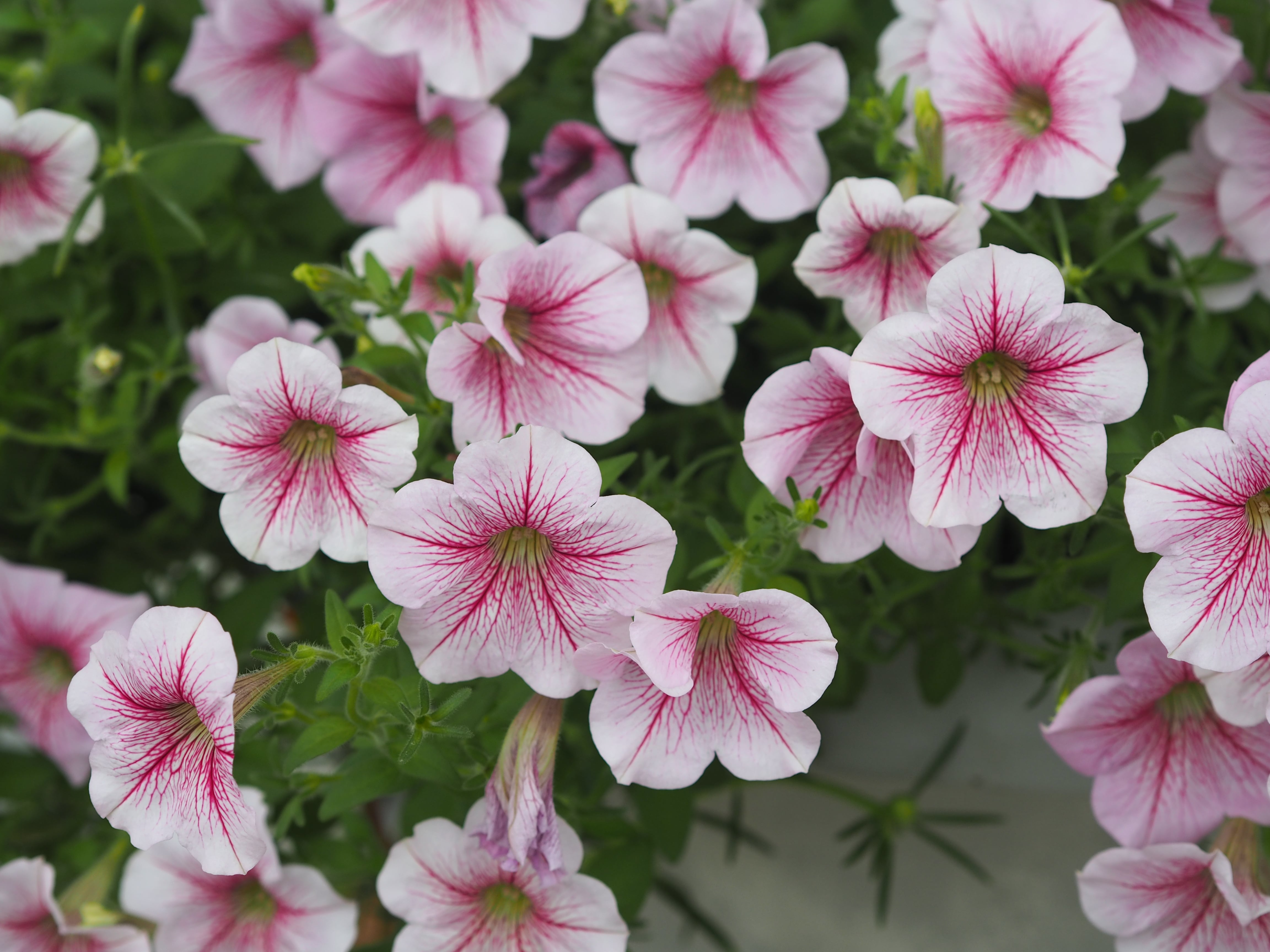 Flowers to plant and sow in June