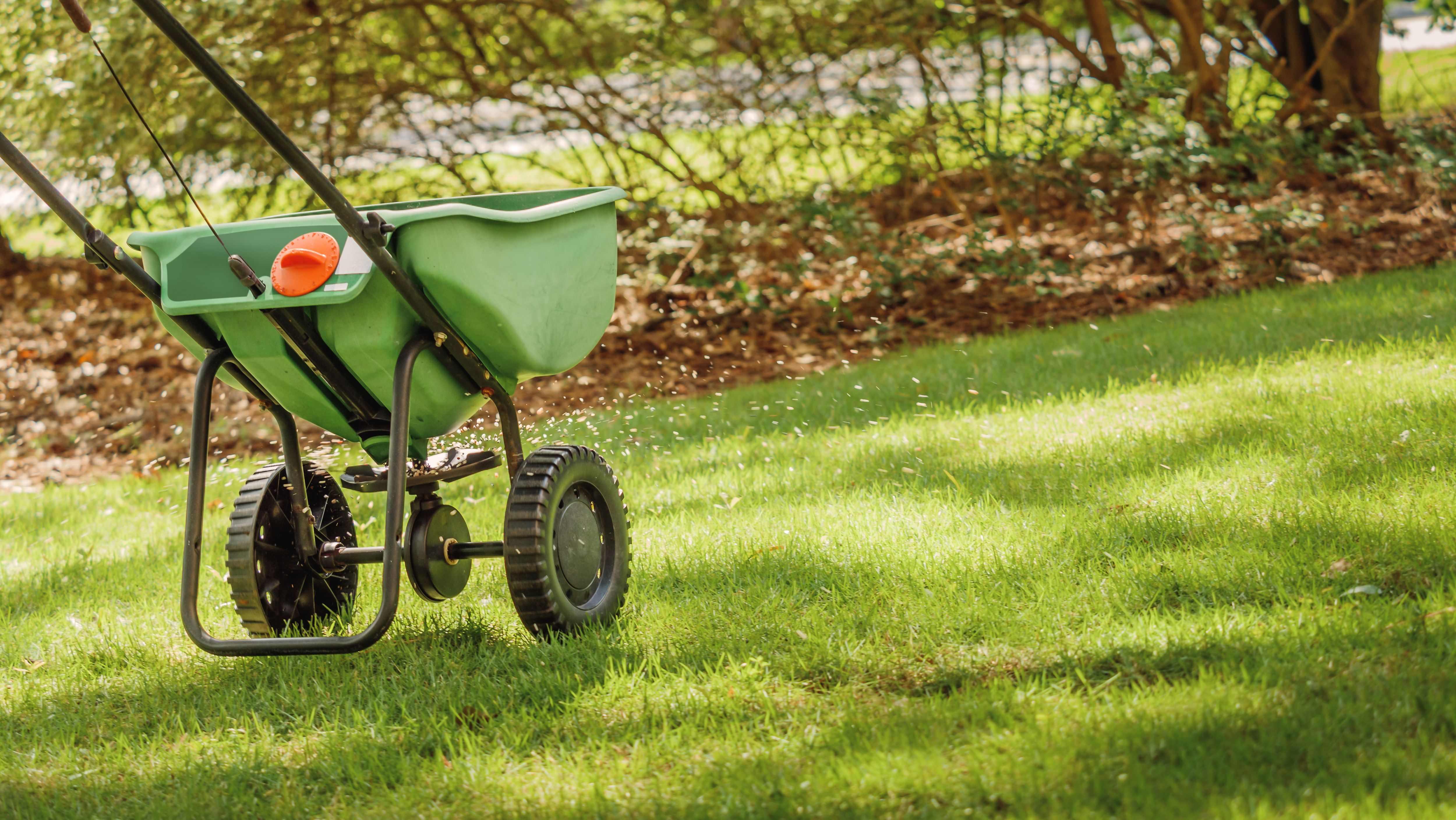 Quand semer la pelouse et quand planter le gazon