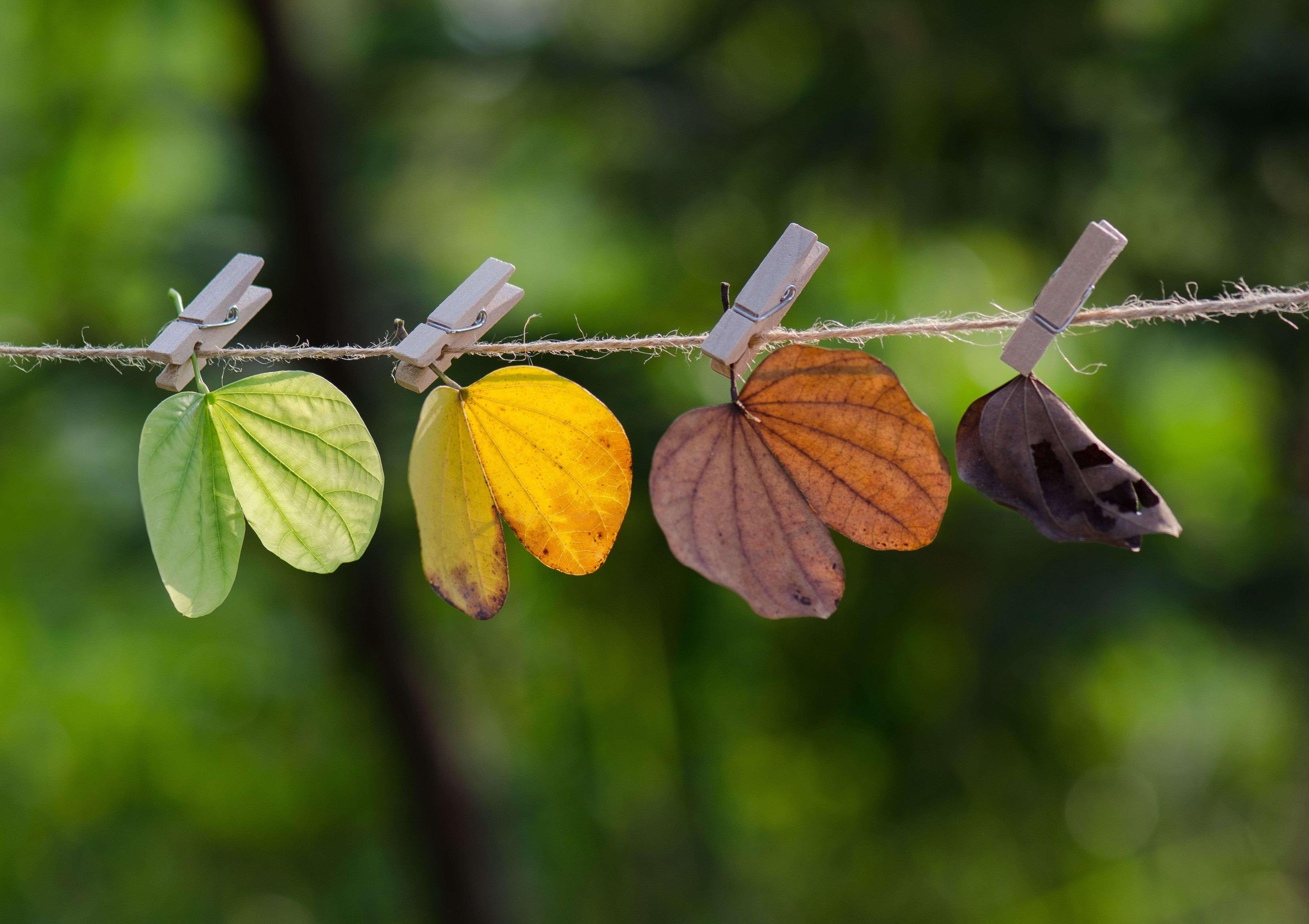Le stagioni  in giardino