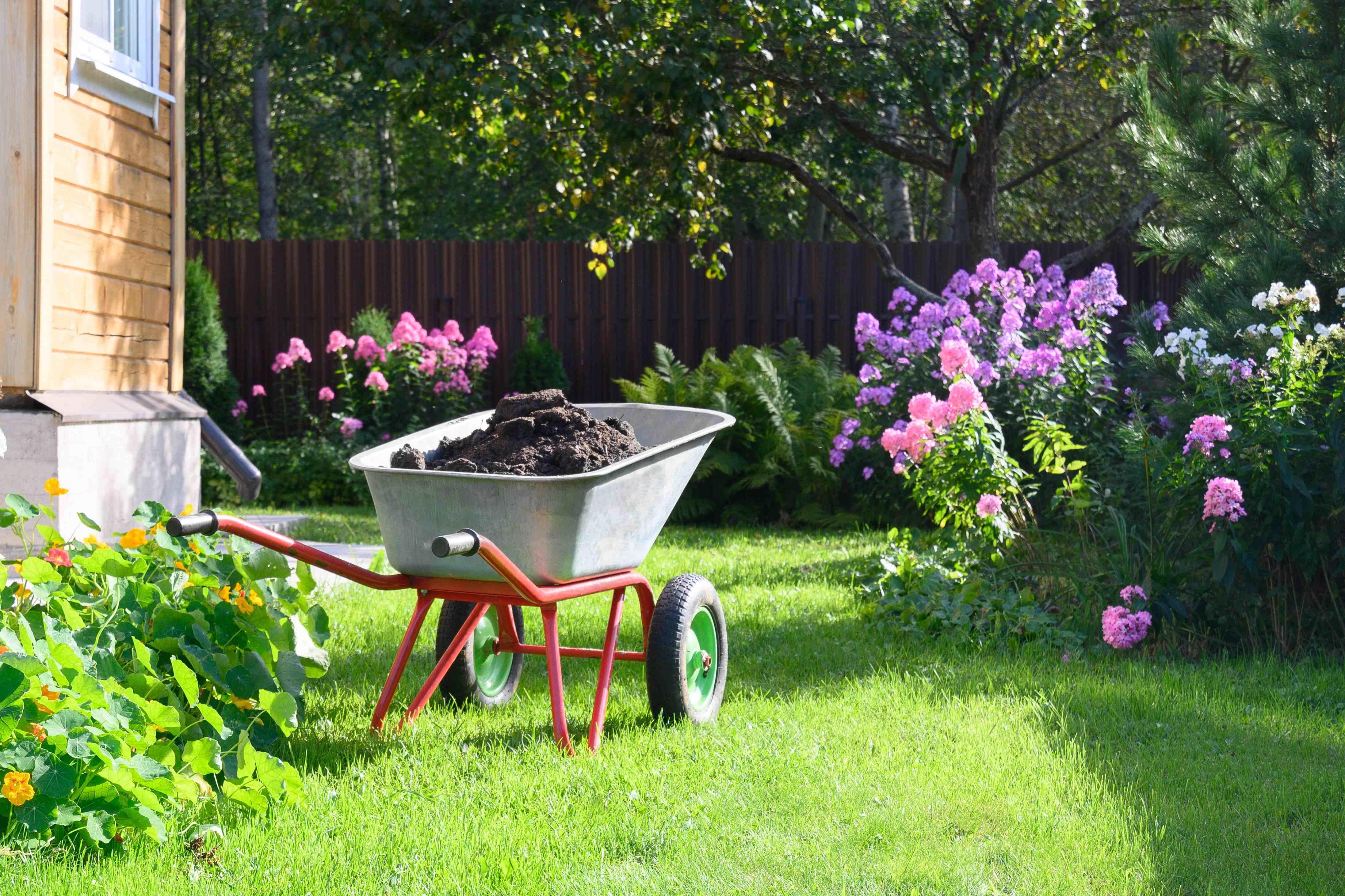 Cura dell'orto in estate