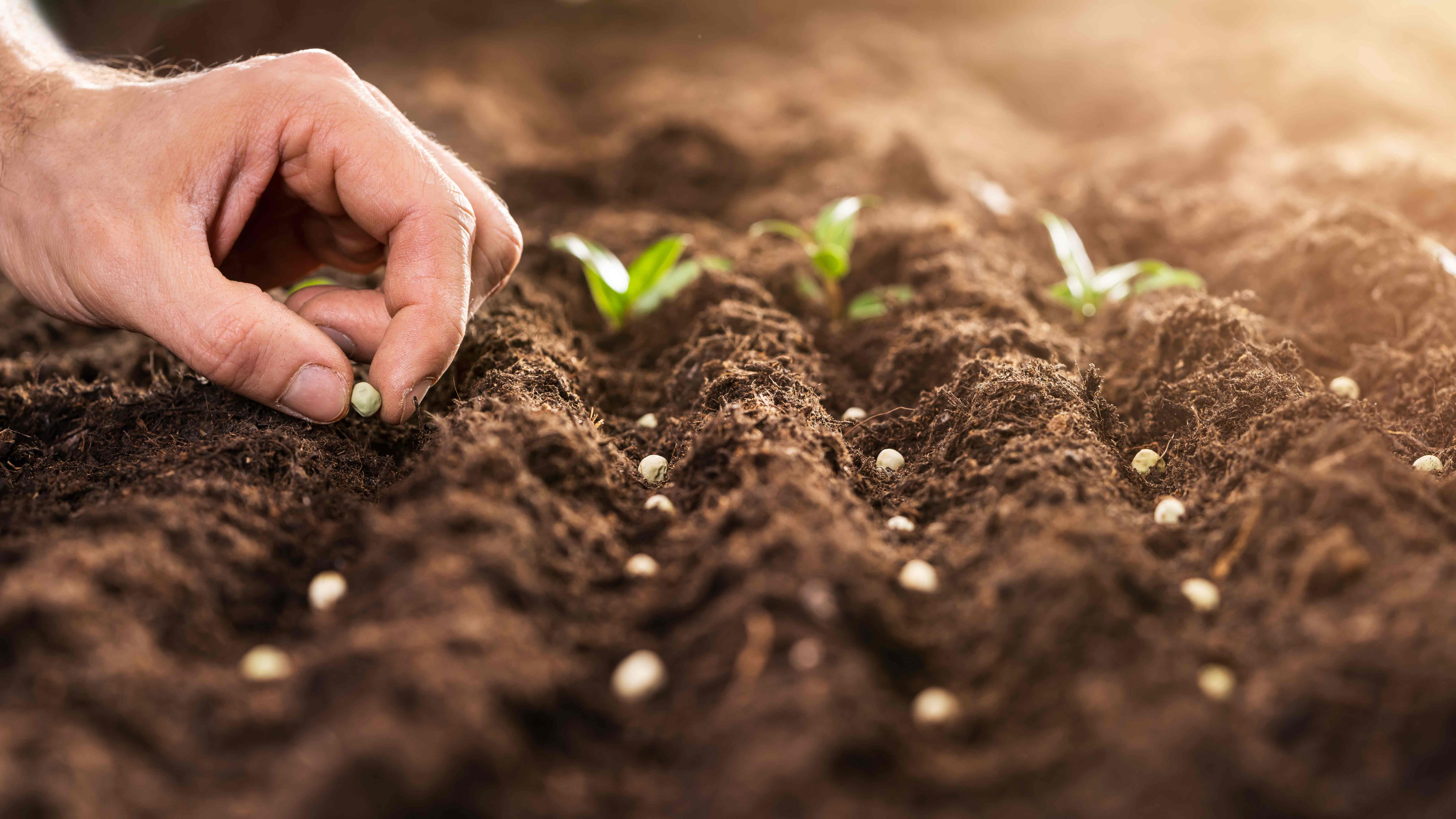 How to Prepare Seedlings