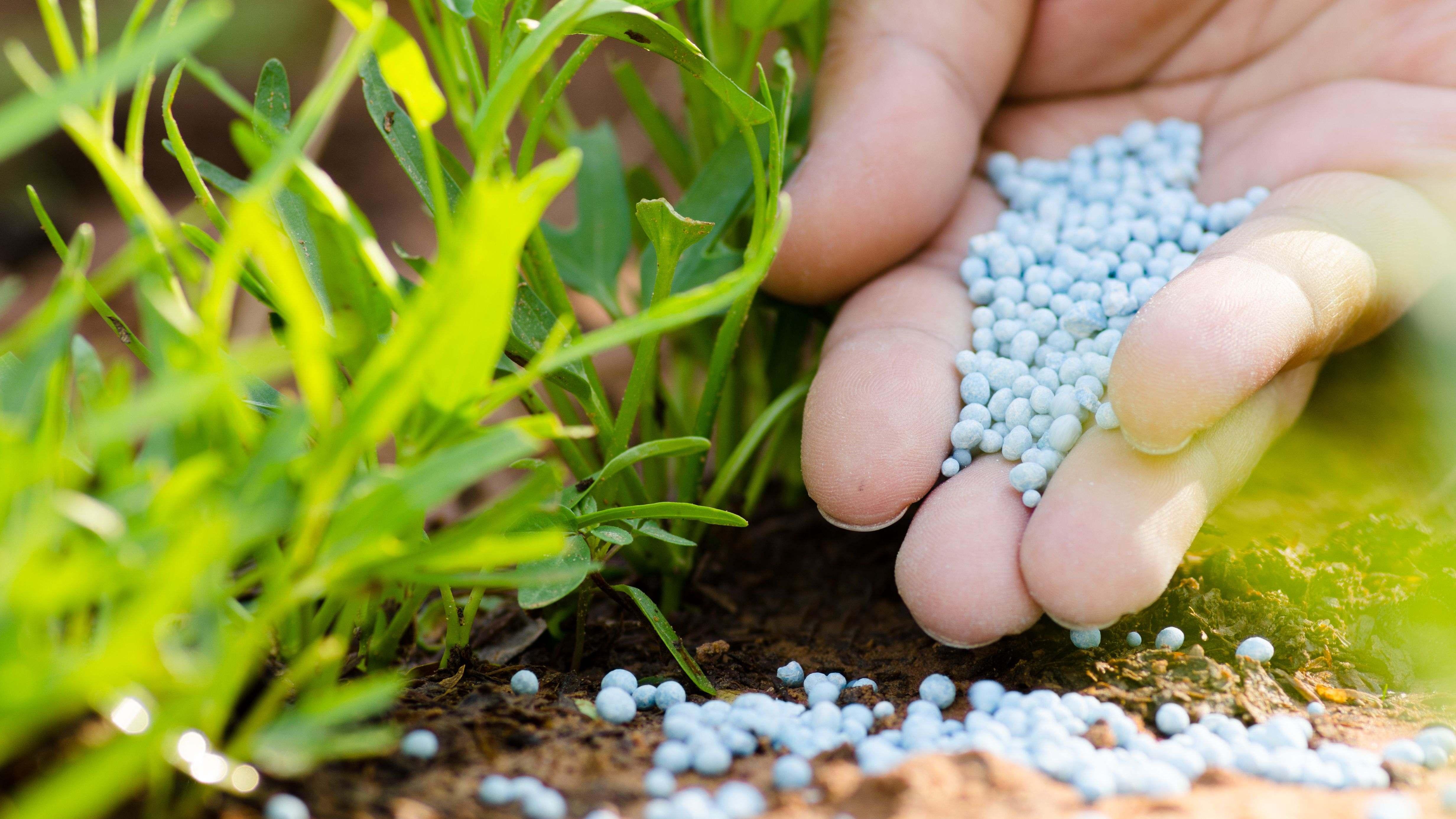 Cómo elegir abonos y fertilizantes