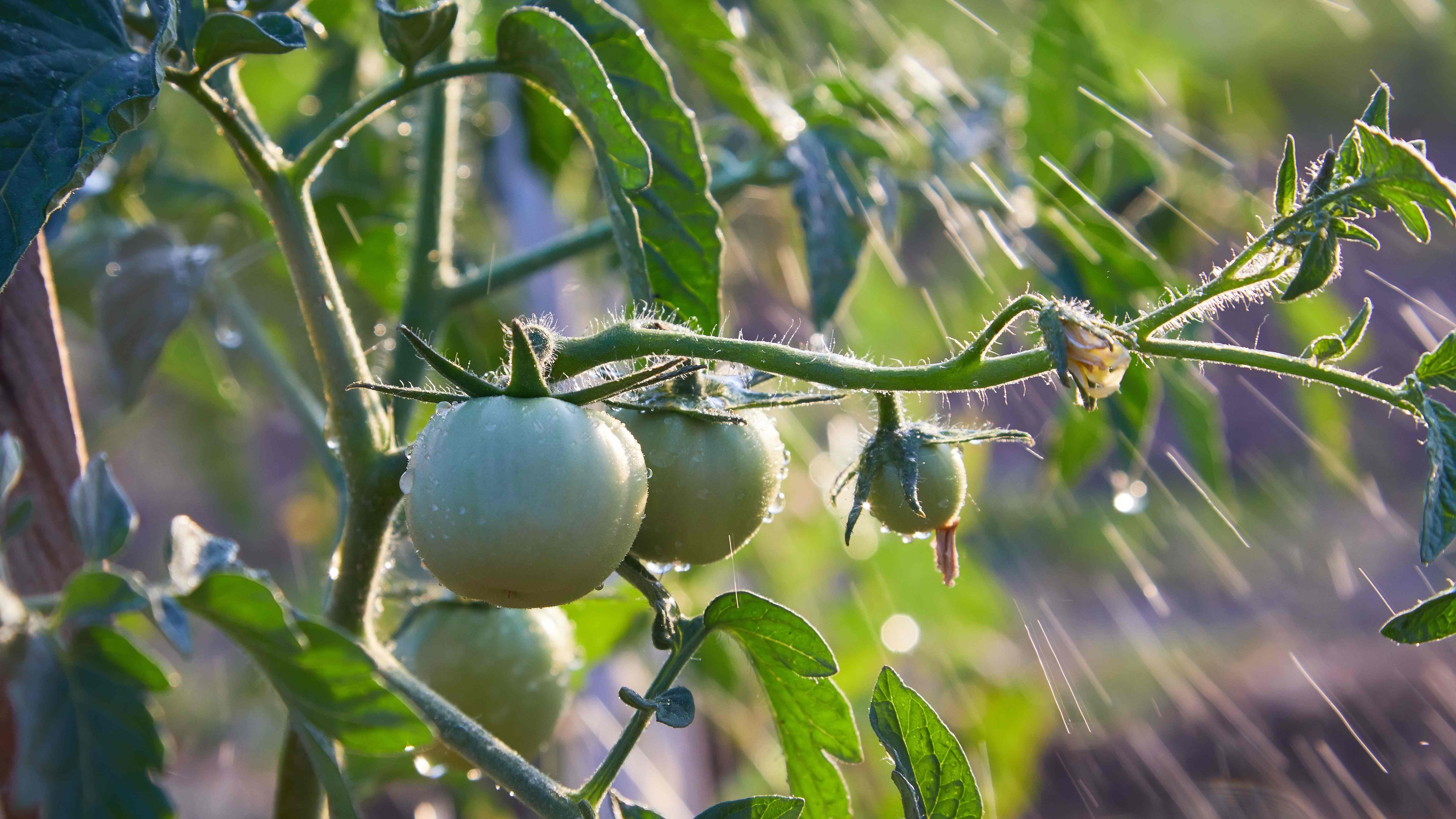 Quale irrigazione per l'orto