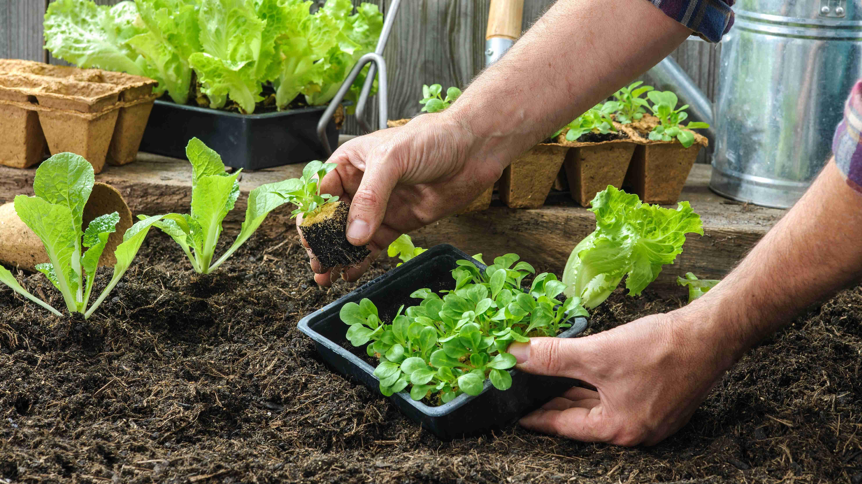 Cuándo y cómo sembrar