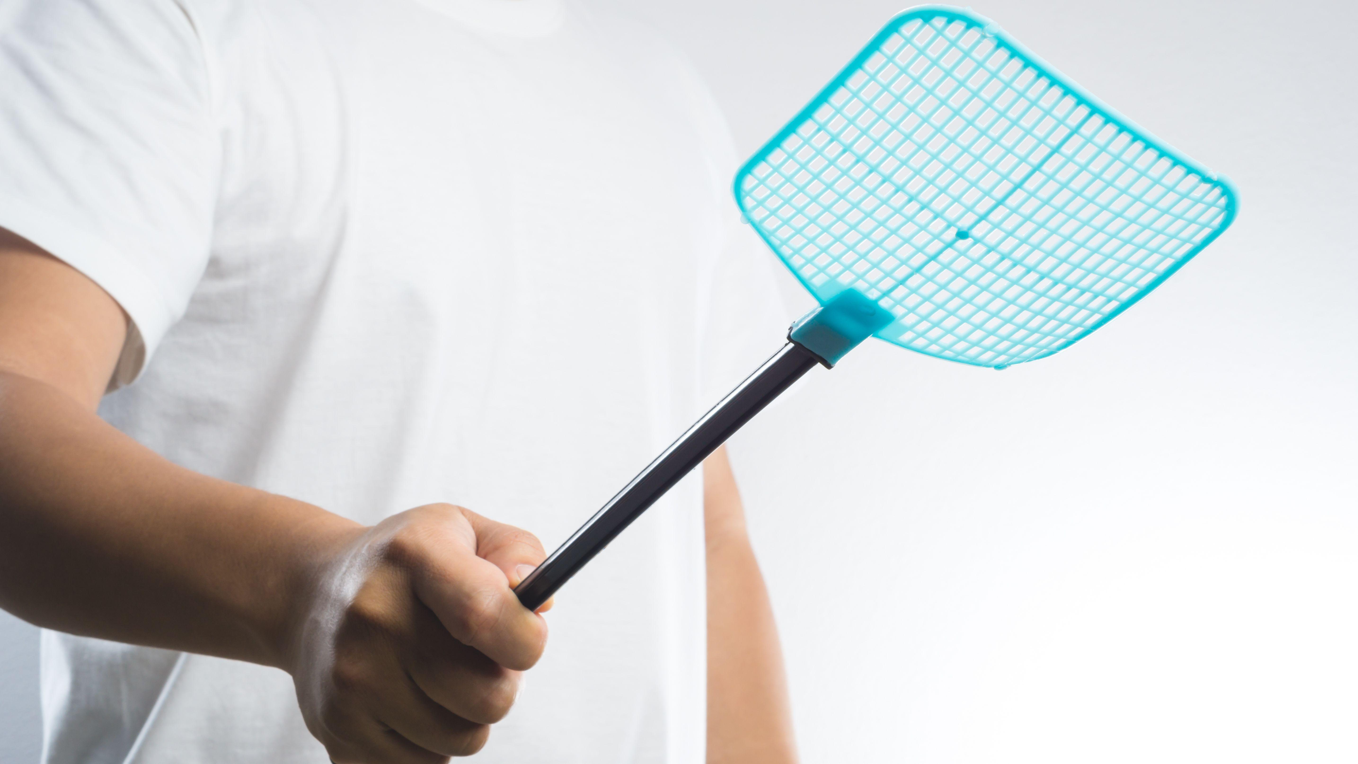 Come liberarsi delle mosche in casa