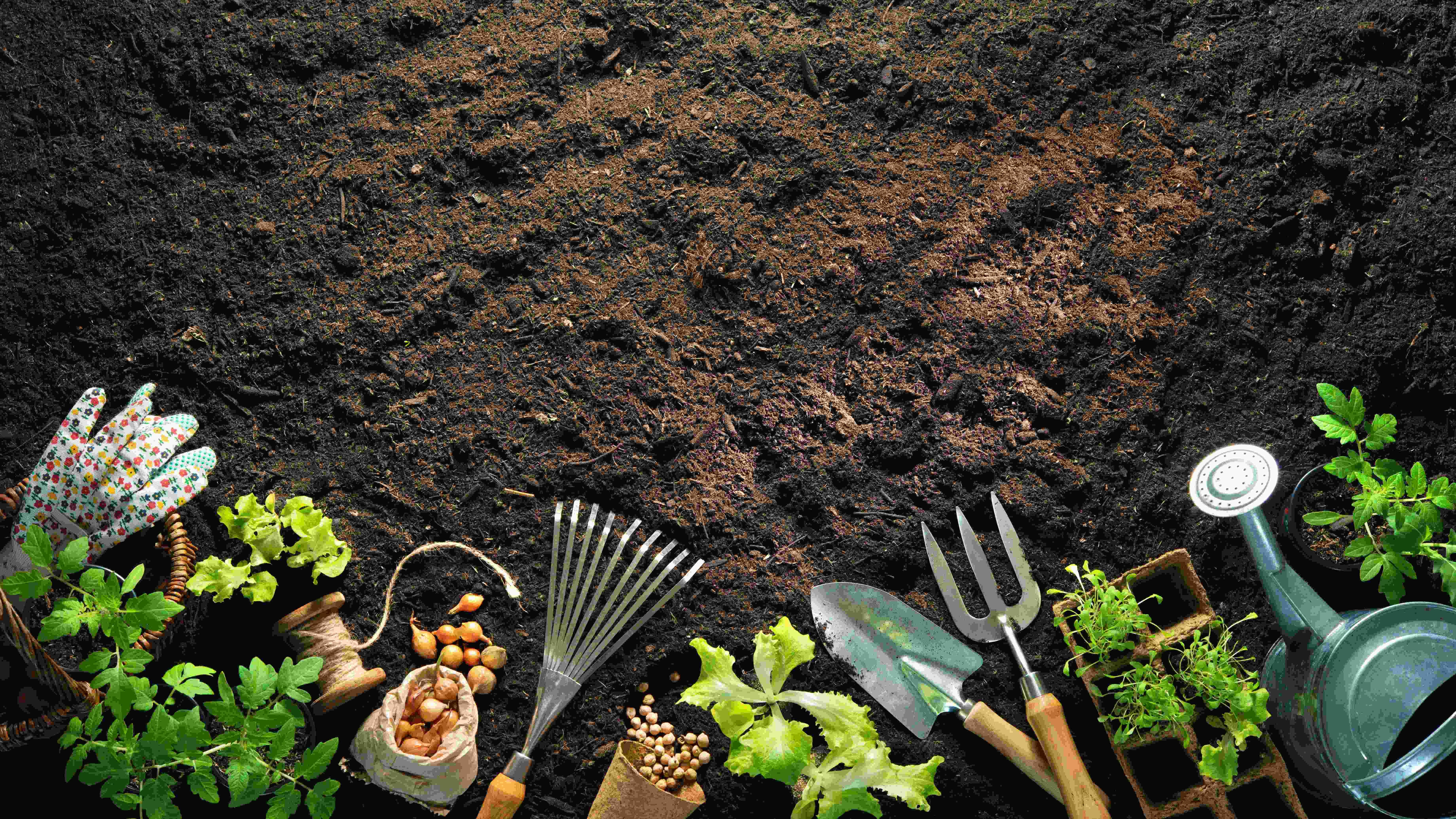 Qué sembrar y plantar en agosto