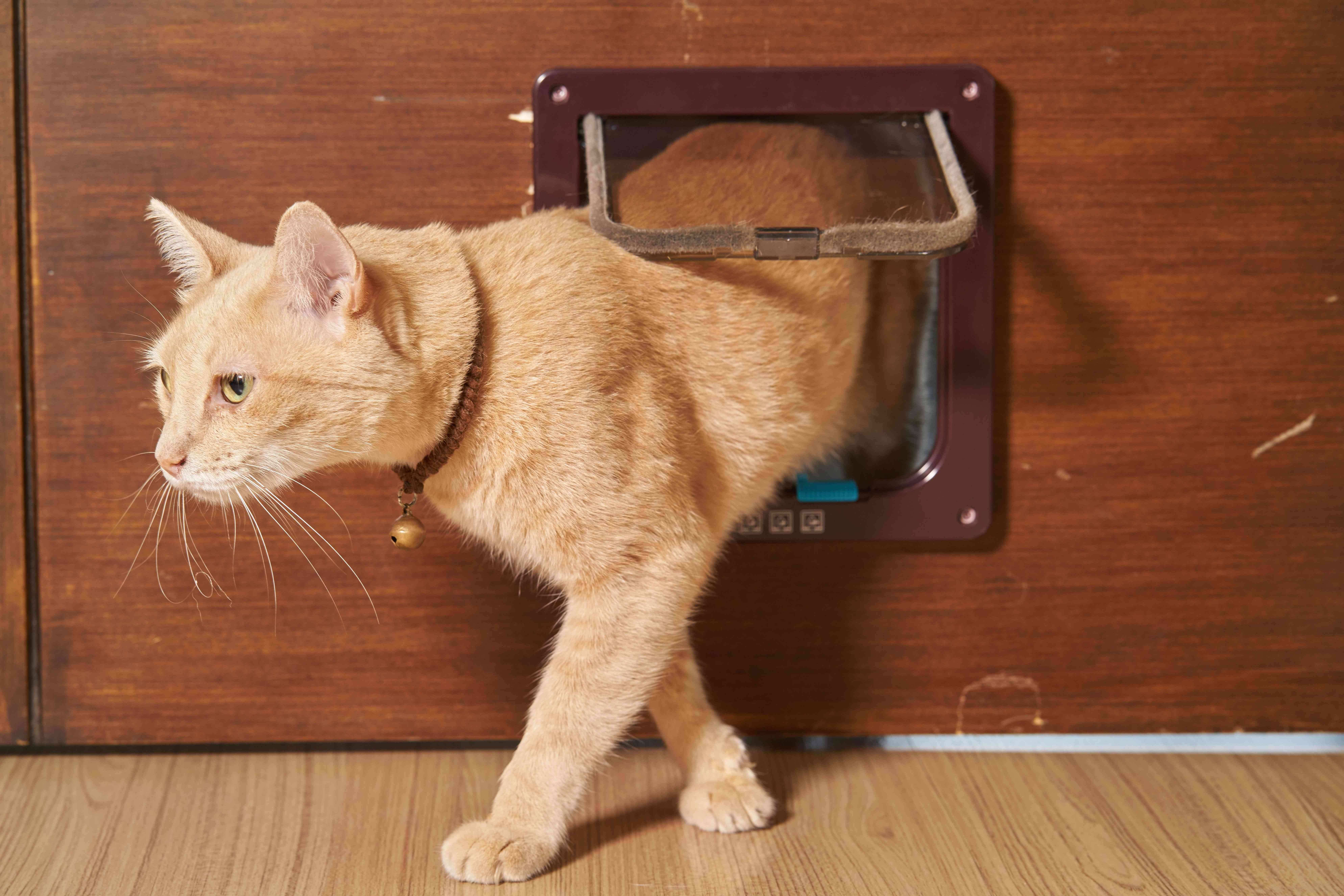 So finden Sie die richtige Katzenklappe