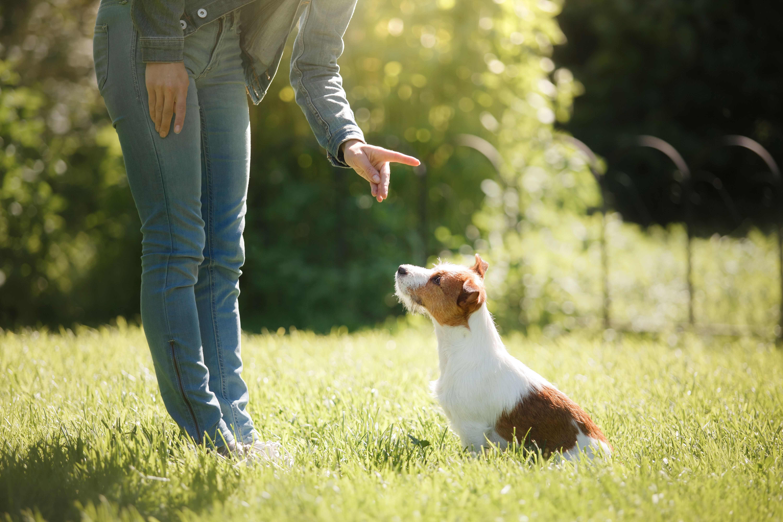 Accessoires de dressage pour chien : comment bien les choisir