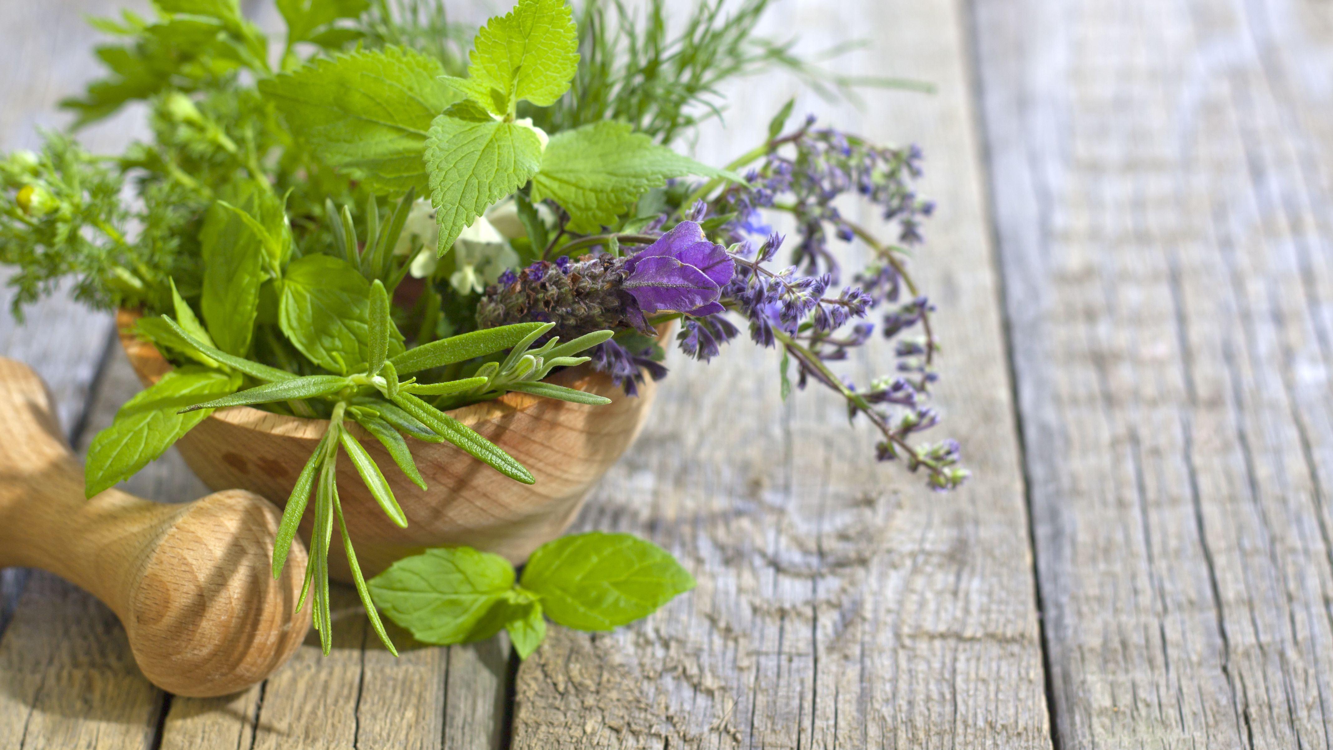 10 Pflanzen gegen Schädlinge  in Haus und Garten