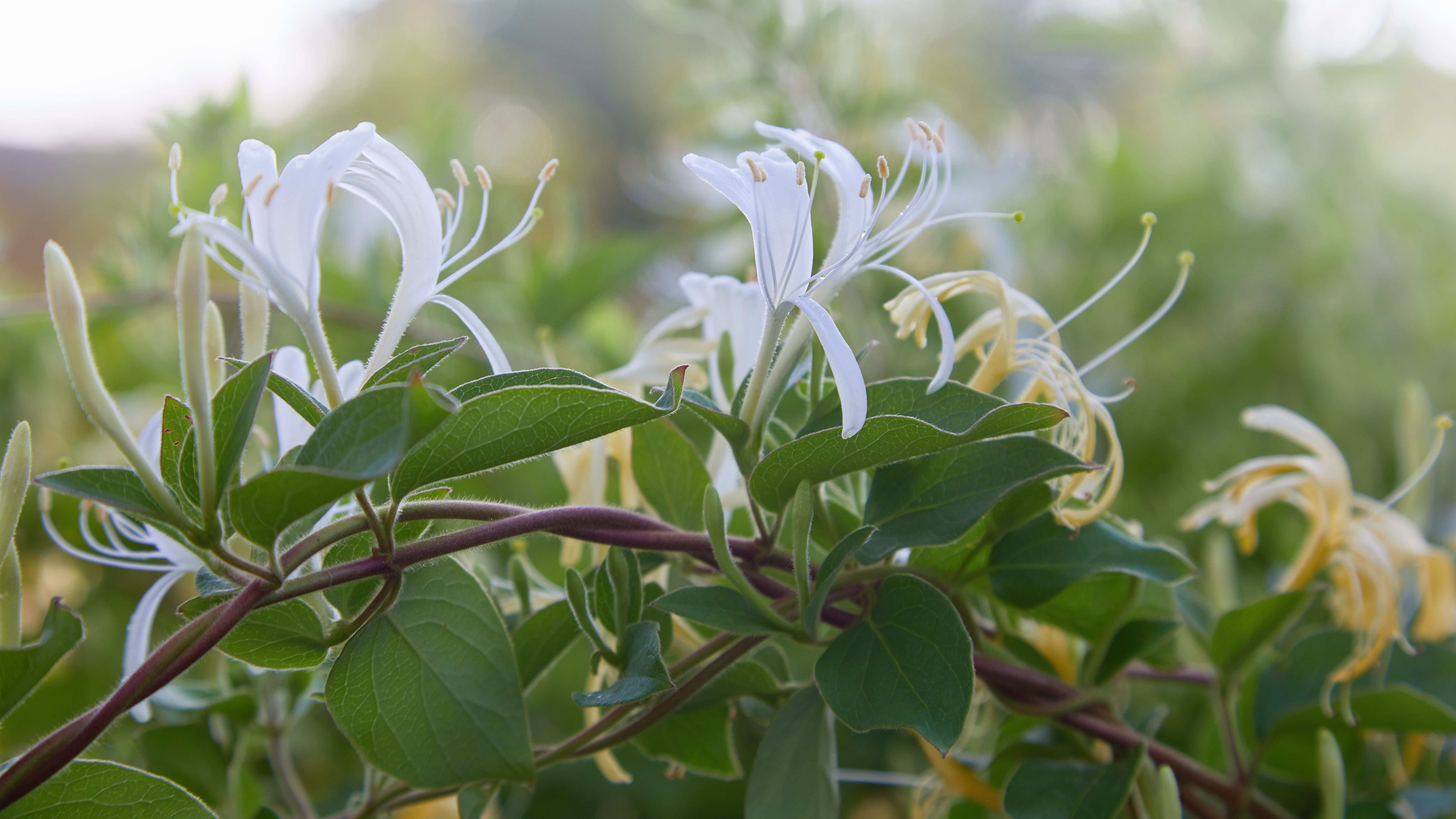 Focus on your  garden trees and flowery shrubs?