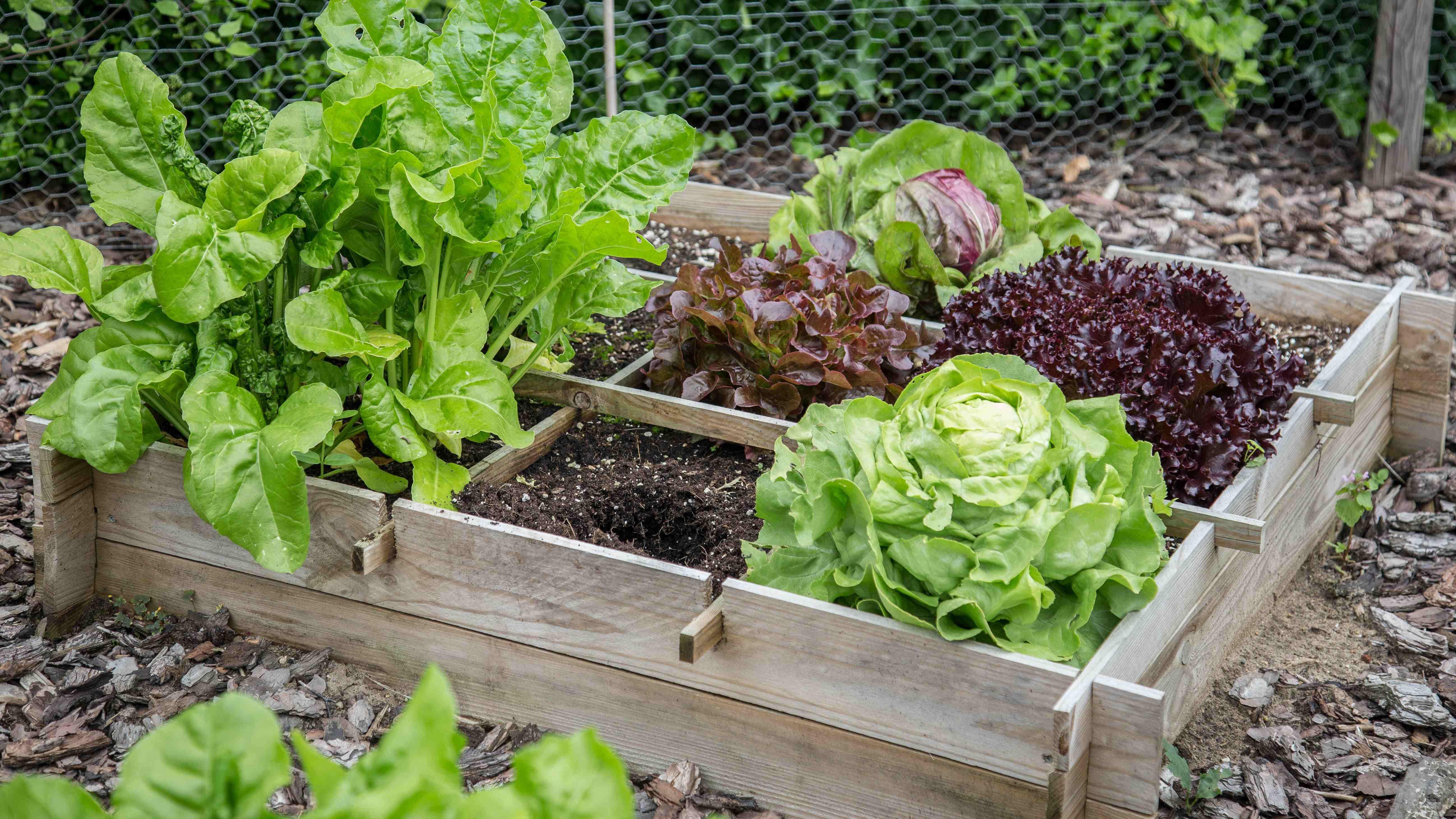 Come realizzare un orto rialzato