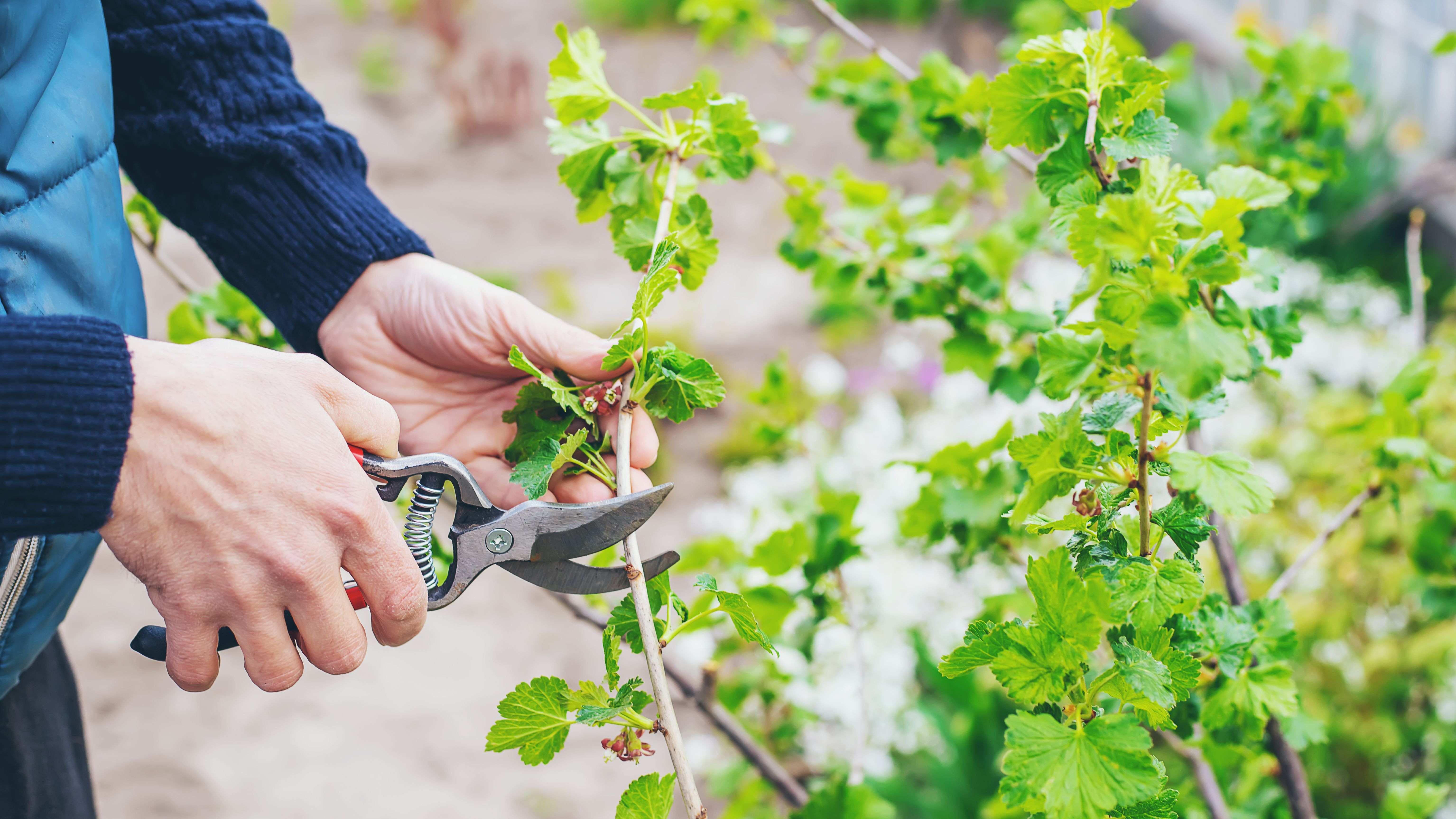Cómo elegir árboles y arbustos ornamentales