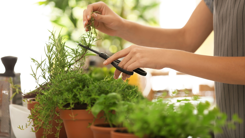 Cómo elegir plantas aromáticas