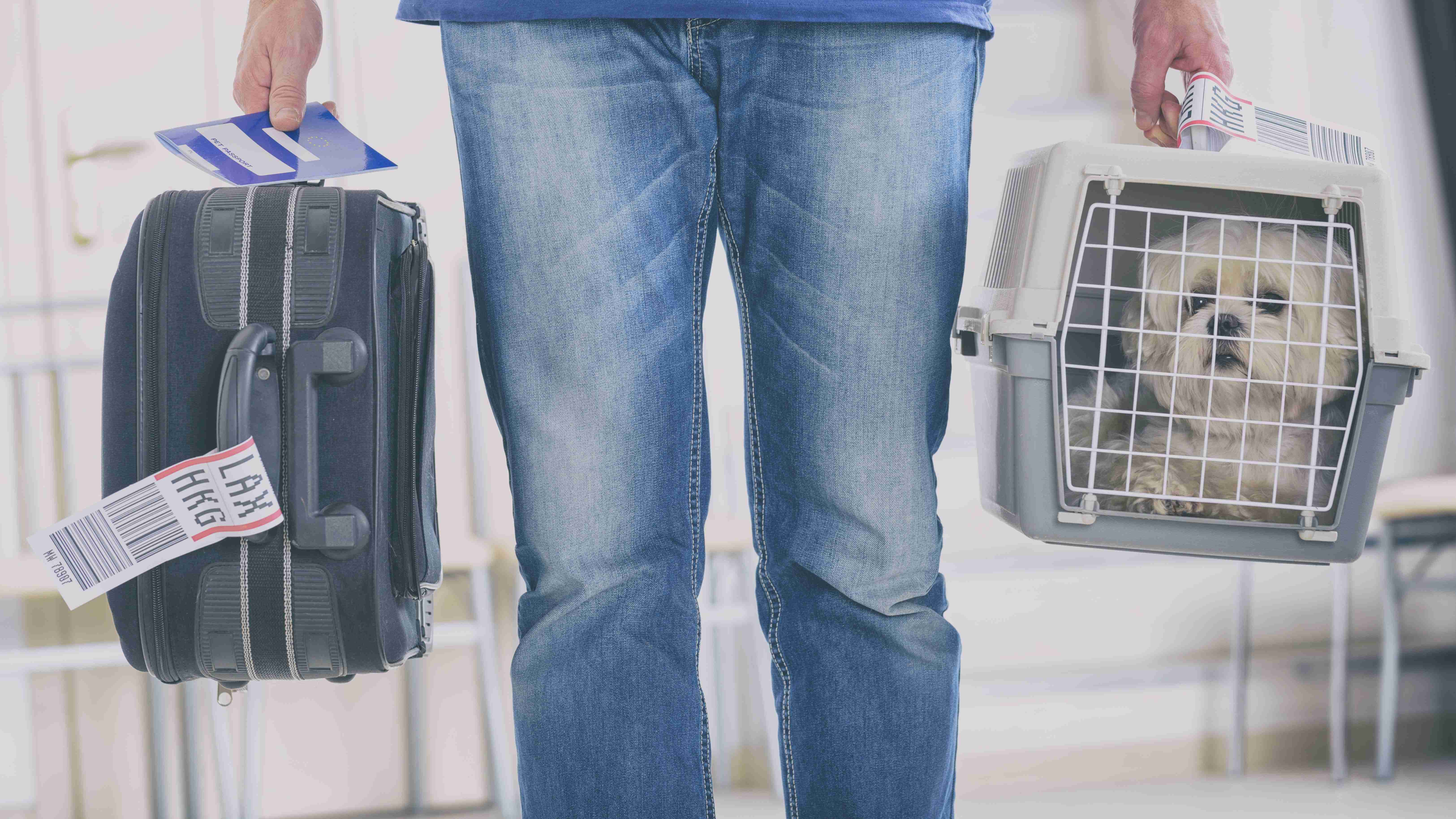 Cage de transport pour chien et chat spéciale avion :  norme IATA