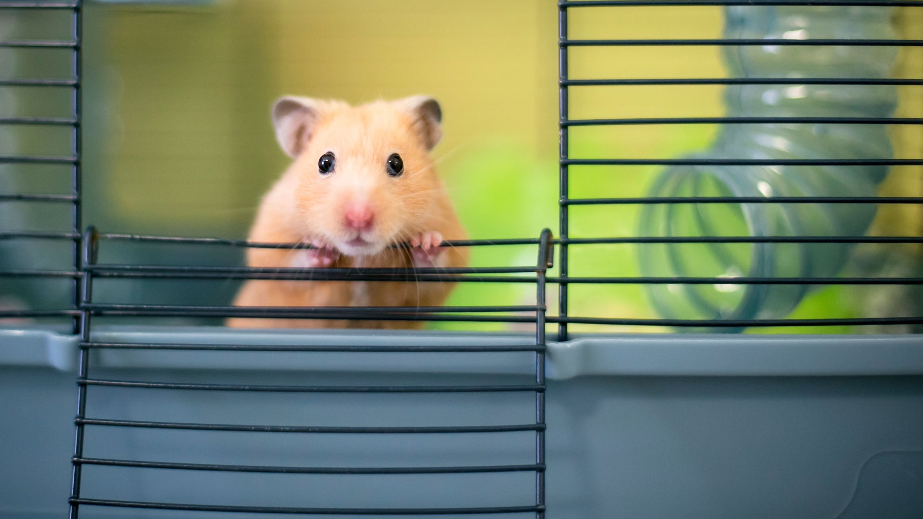 Small pet cage buying guide