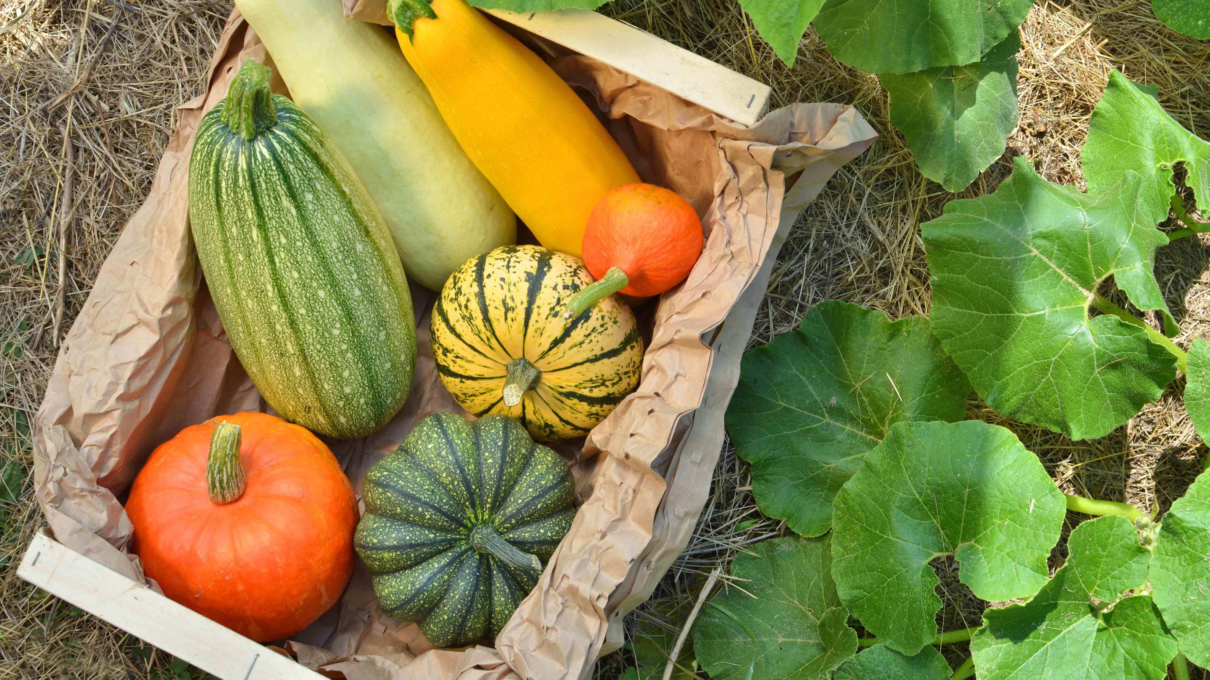 Cos'è la permacultura e quali vantaggi offre