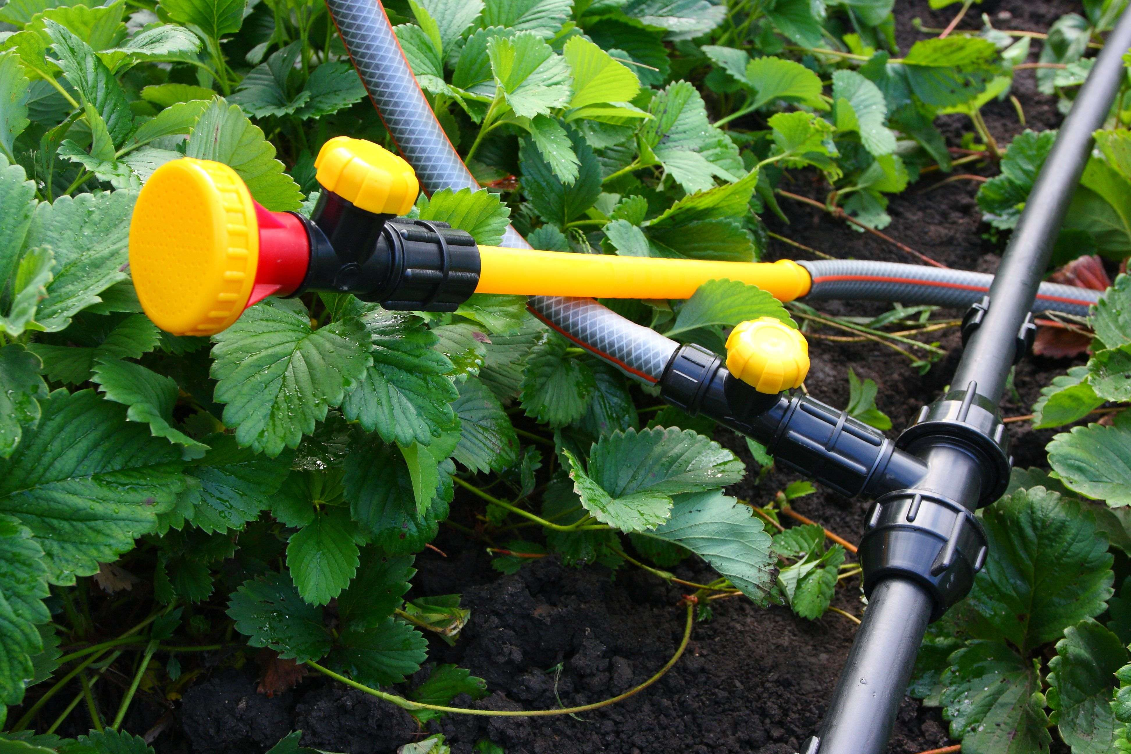 How to choose your watering equipment?