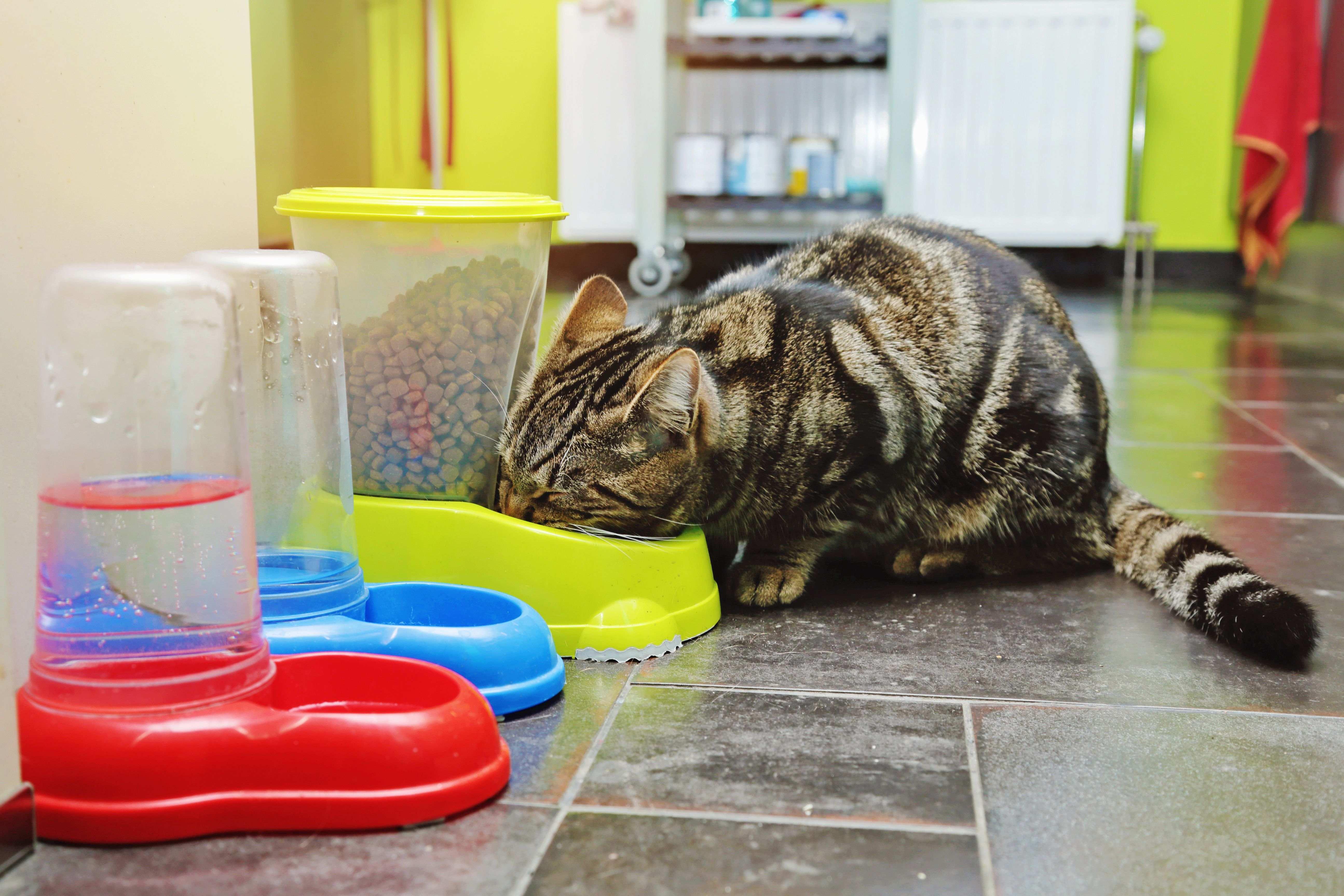 ¿Cómo elegir un comedero para gatos?