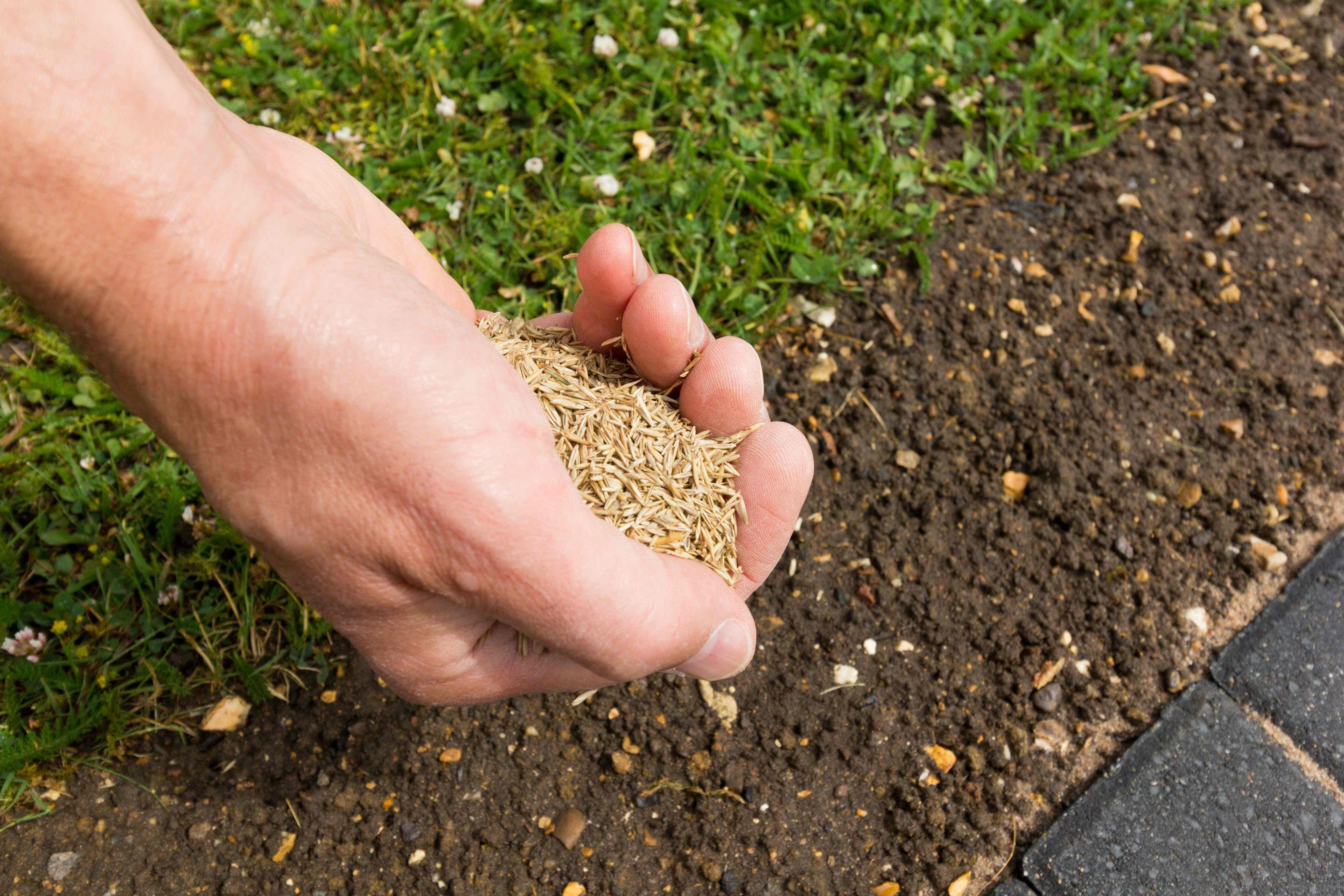 Come scegliere l'erba sintetica
