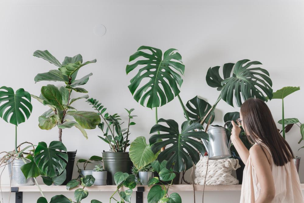 ¿Cómo elegir plantas de interior?