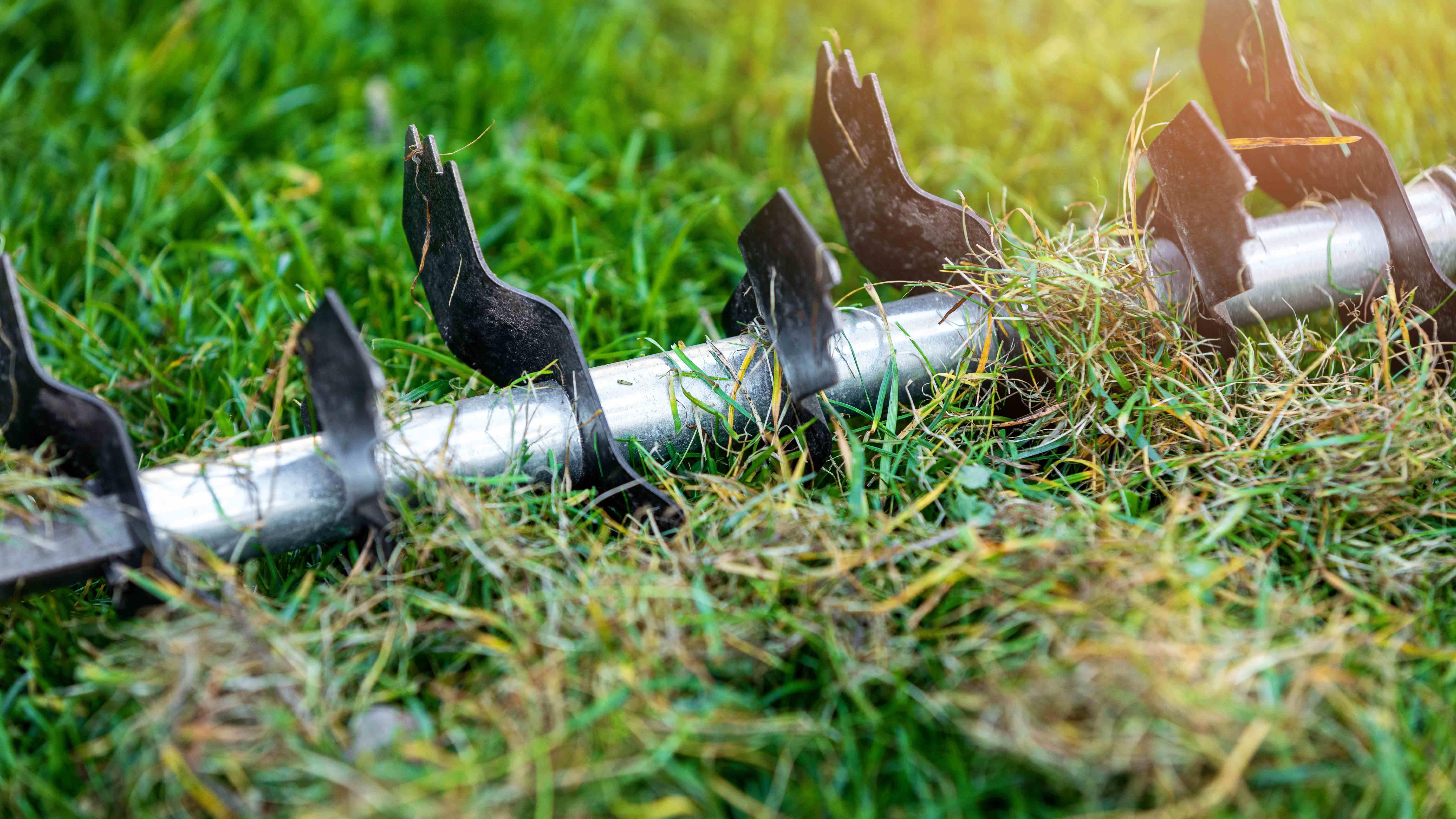 Scarifier la pelouse : comment éliminer la mousse du gazon