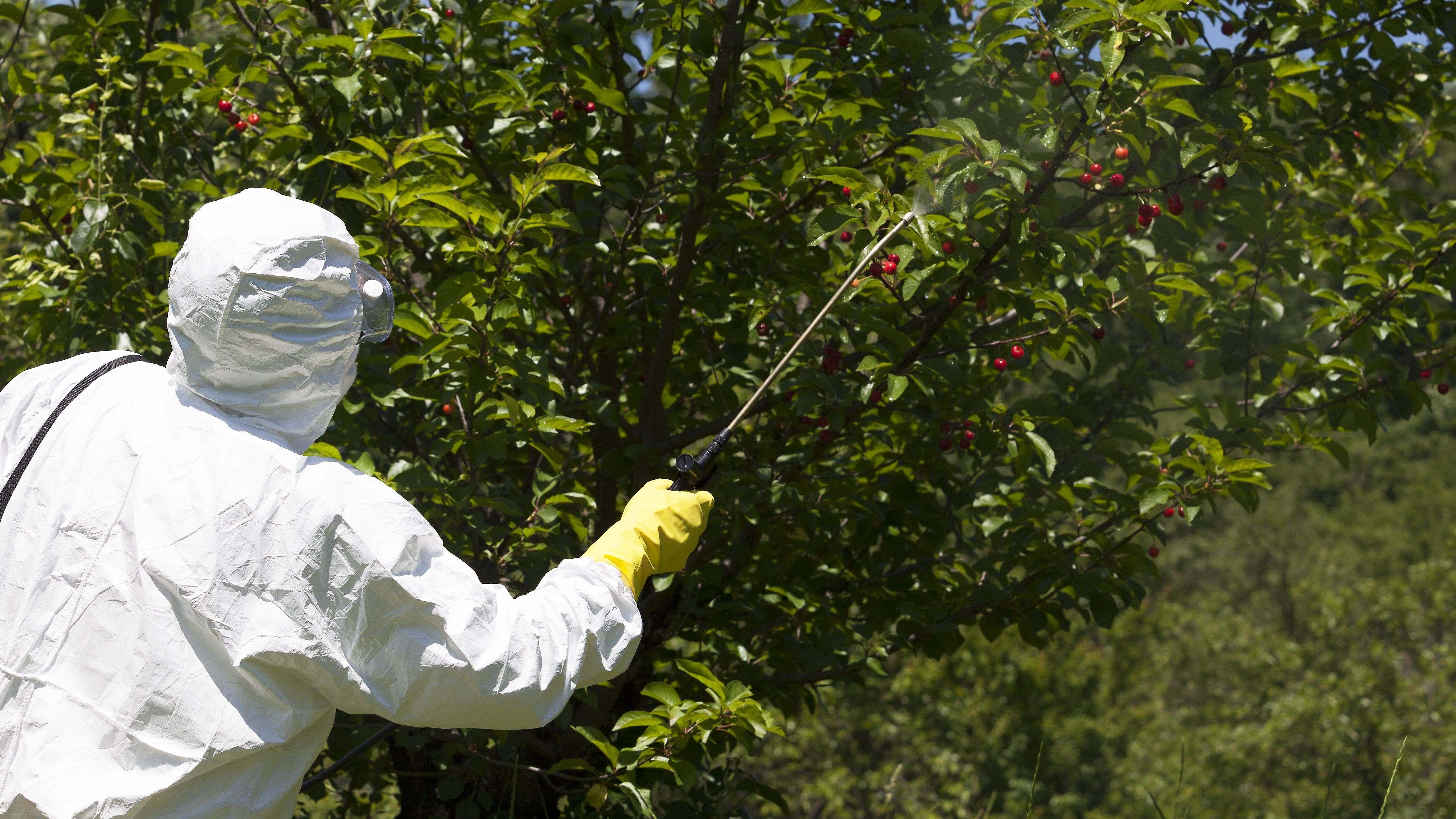Cómo tratar los árboles frutales