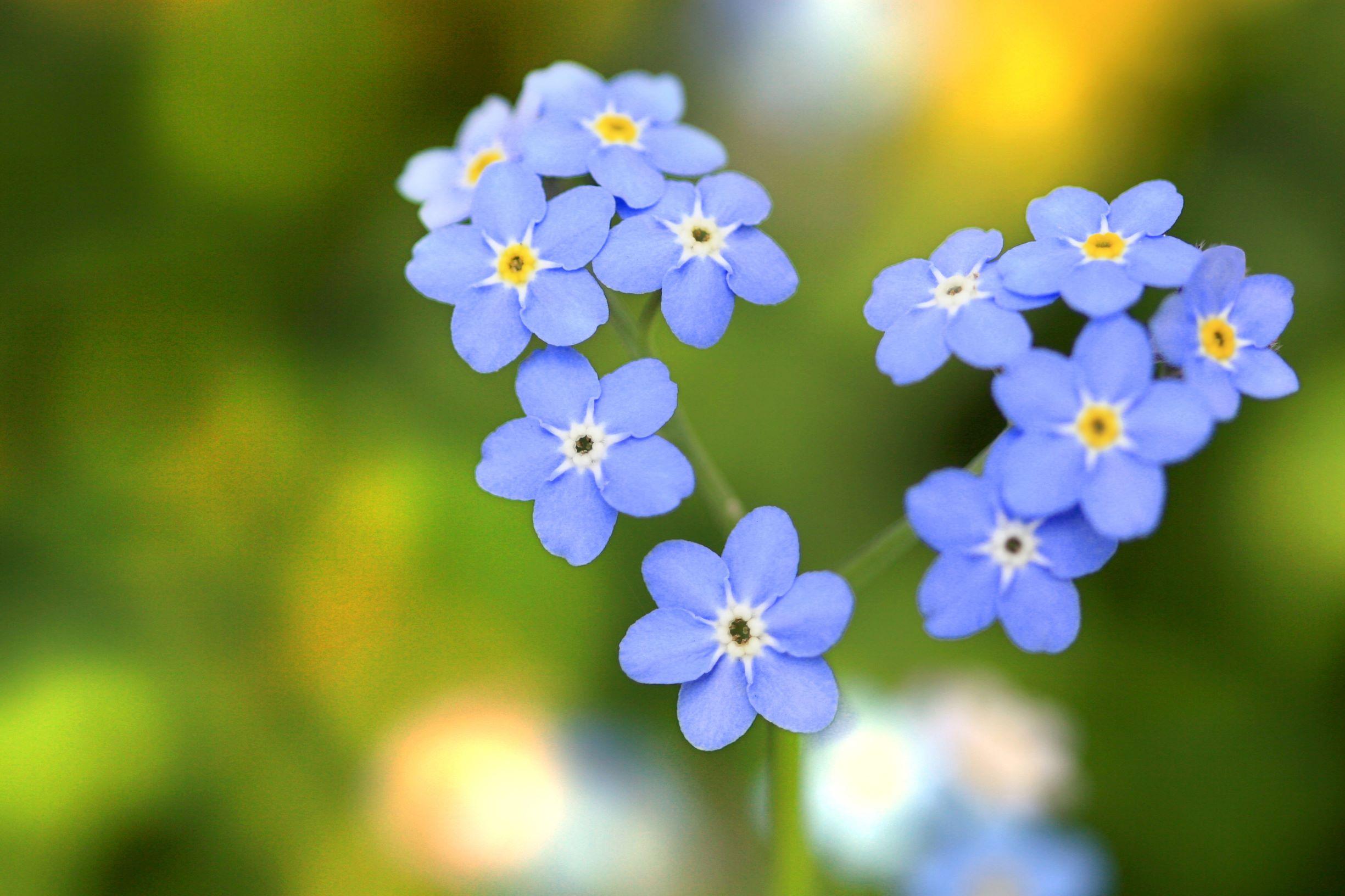 Blumensprache - 20 Blumen und ihre Bedeutung