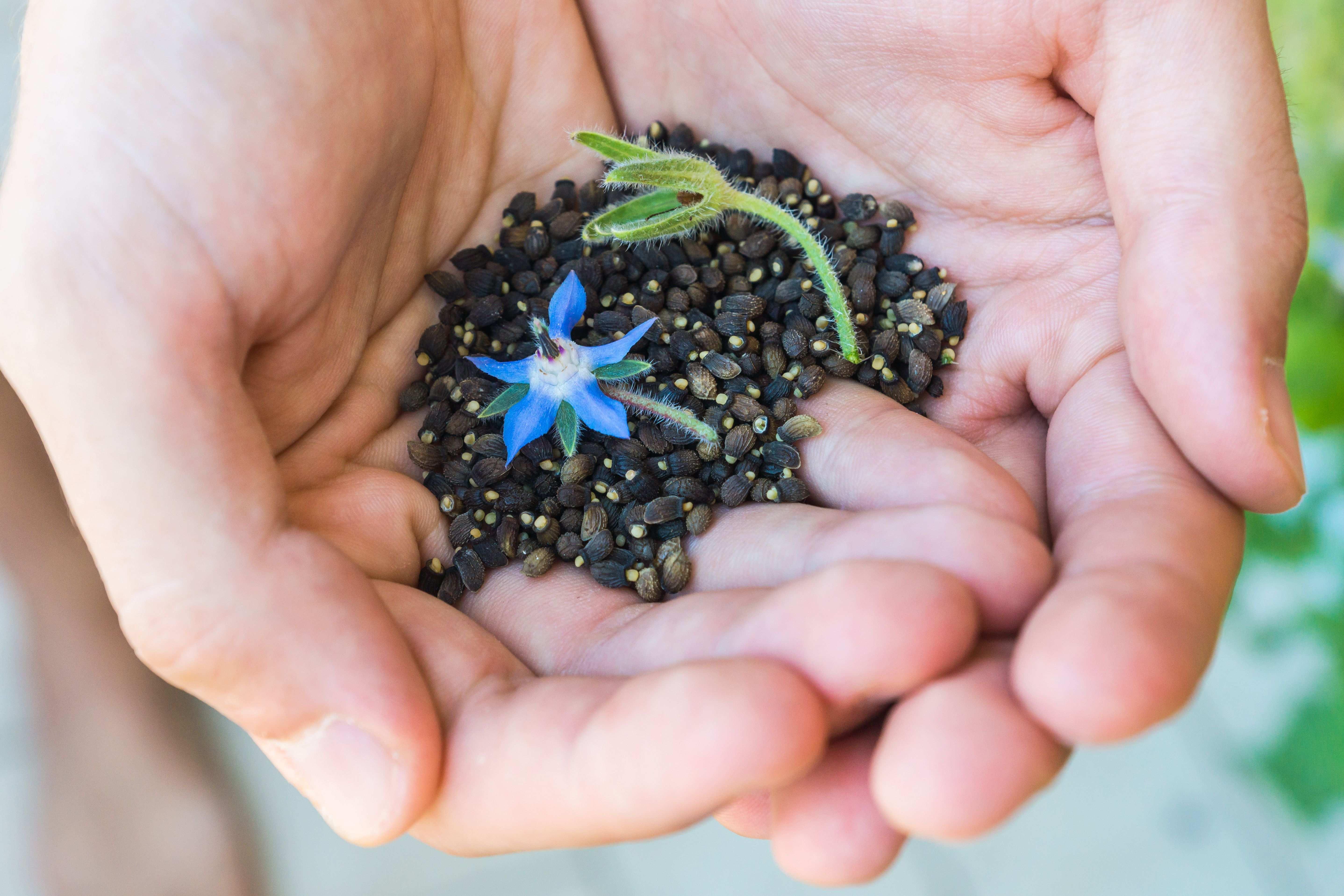 Graines de fleurs :  10 fleurs à planter