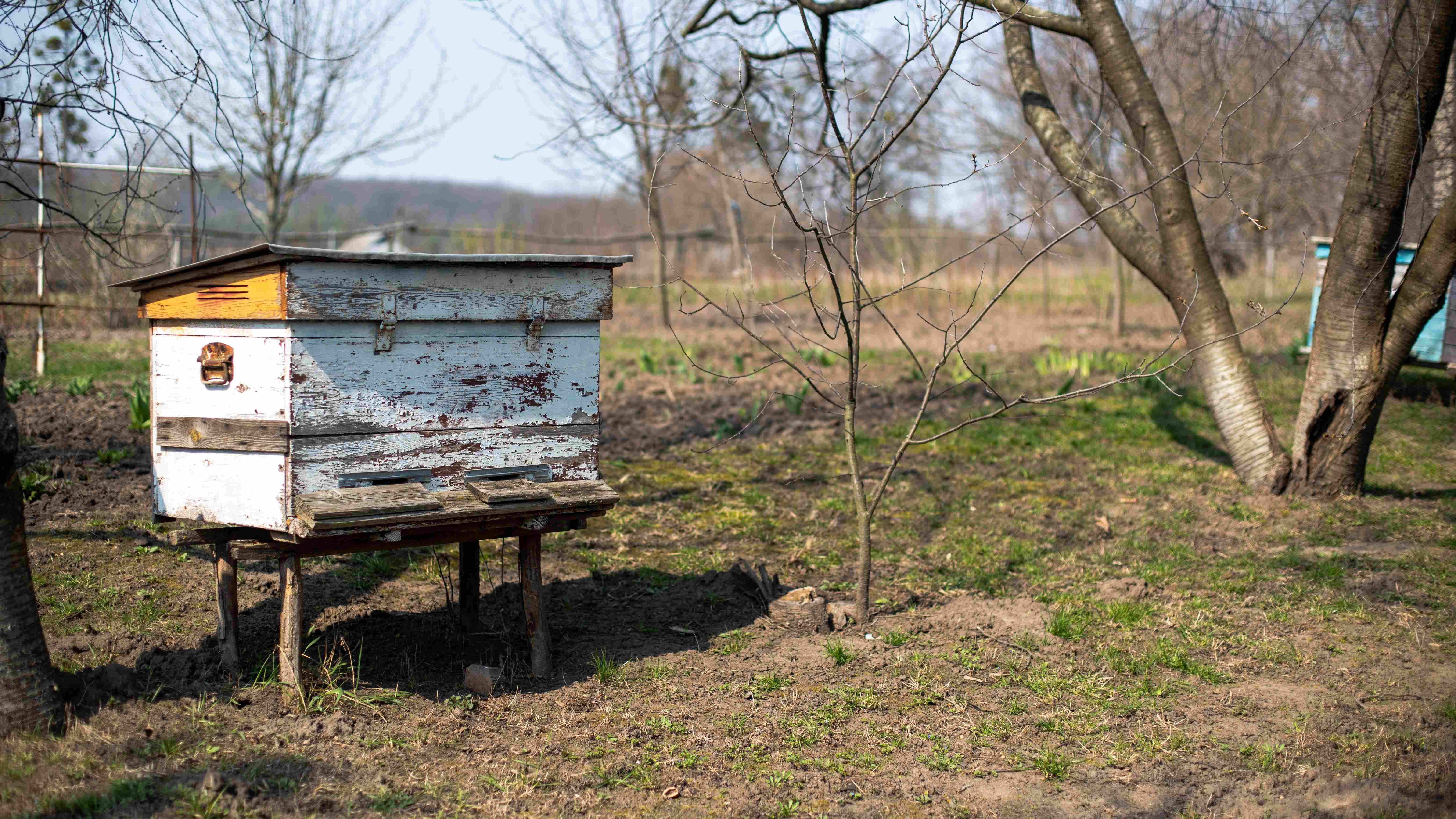 Come iniziare con l'apicoltura