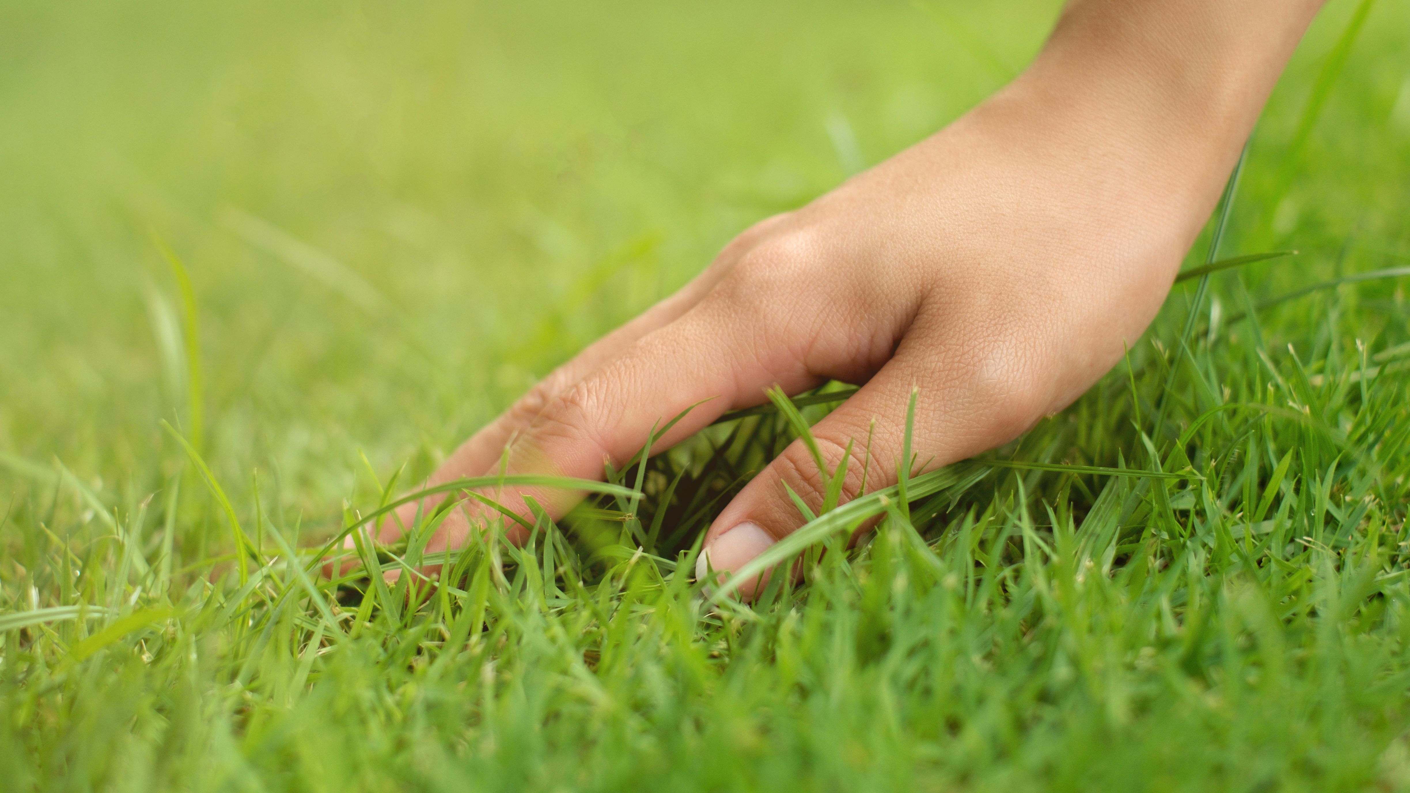 How to grow a green lawn