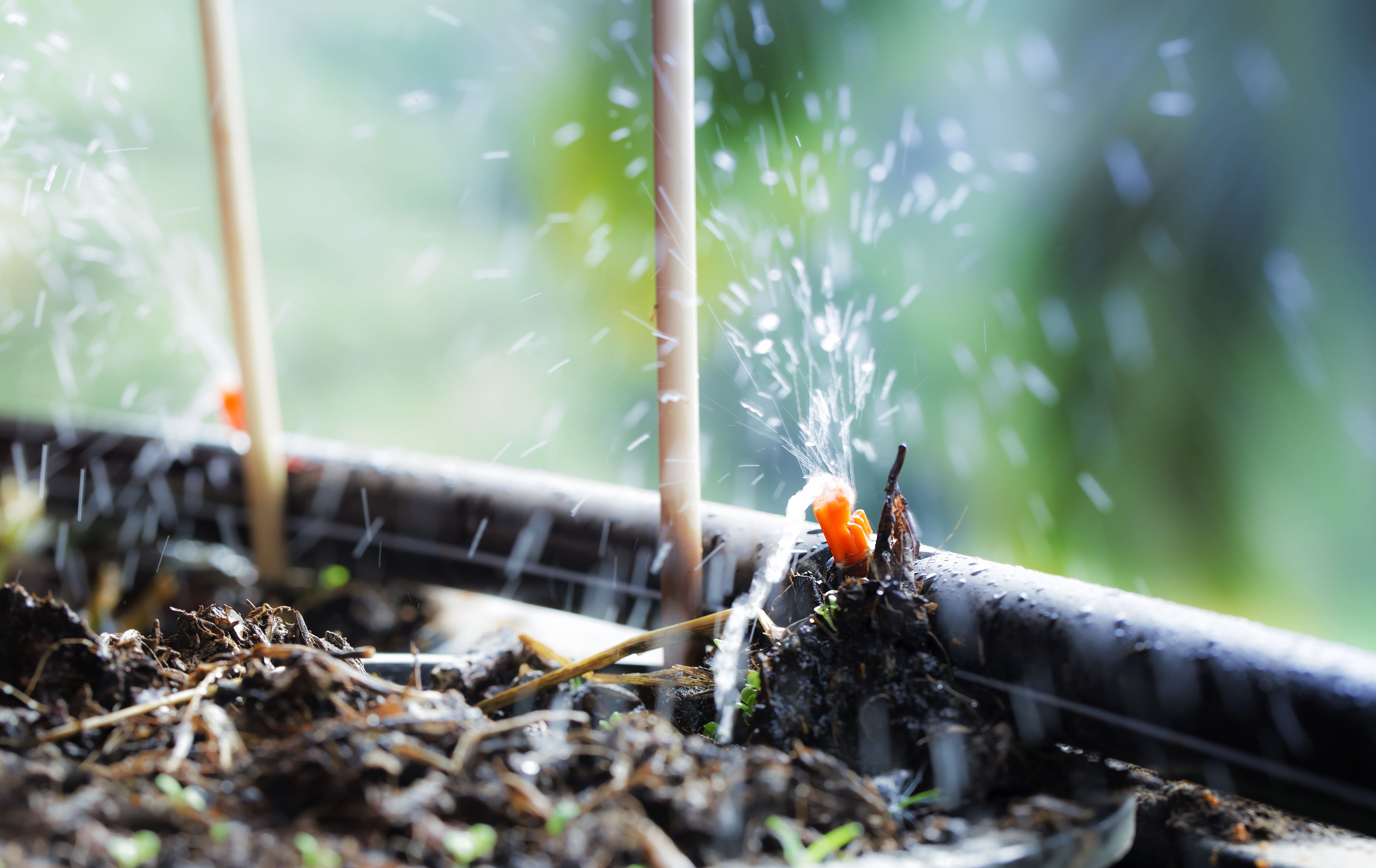 Cómo elegir un sistema de riego por goteo
