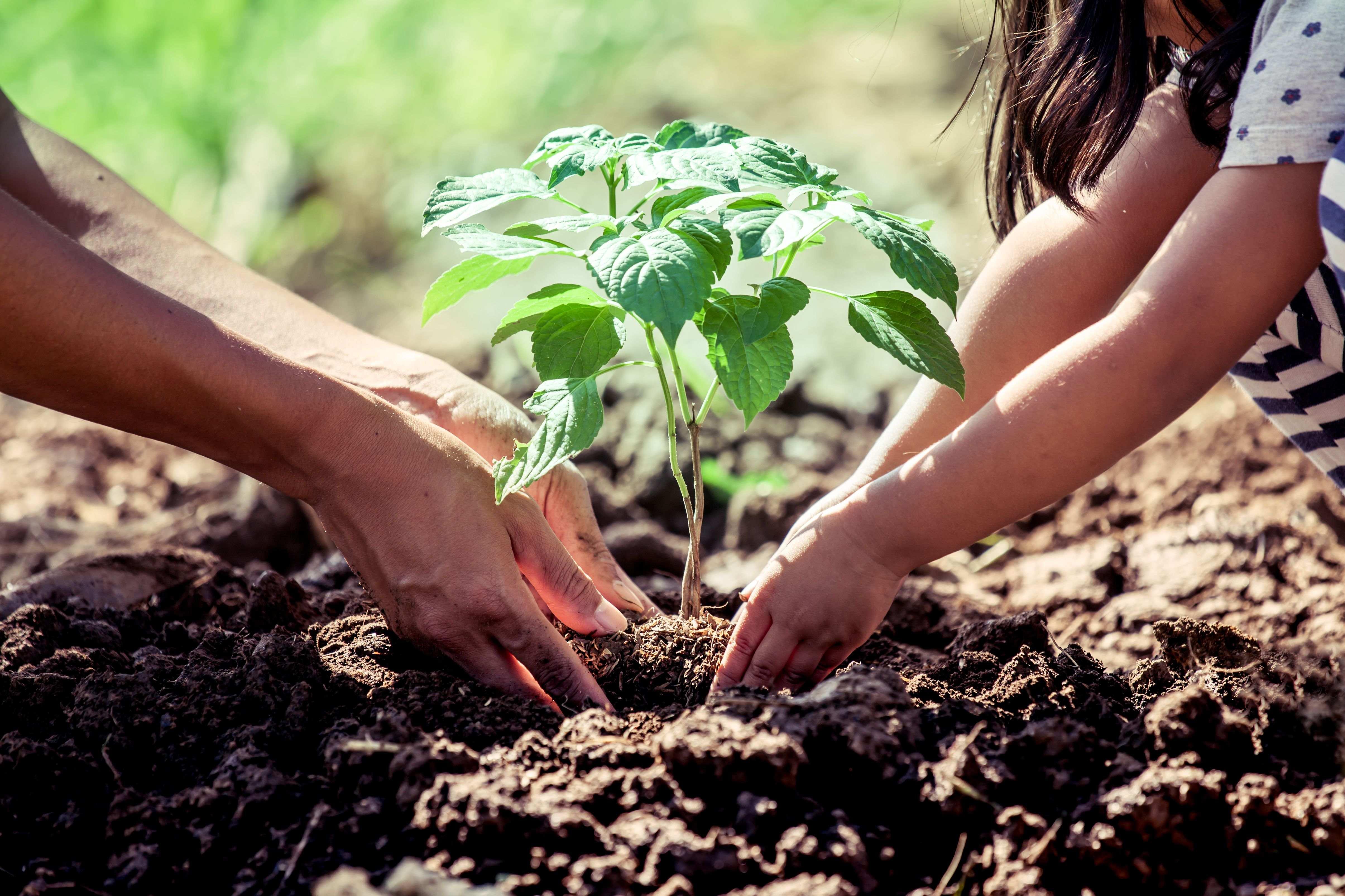 Qué sembrar y plantar en el jardín en septiembre