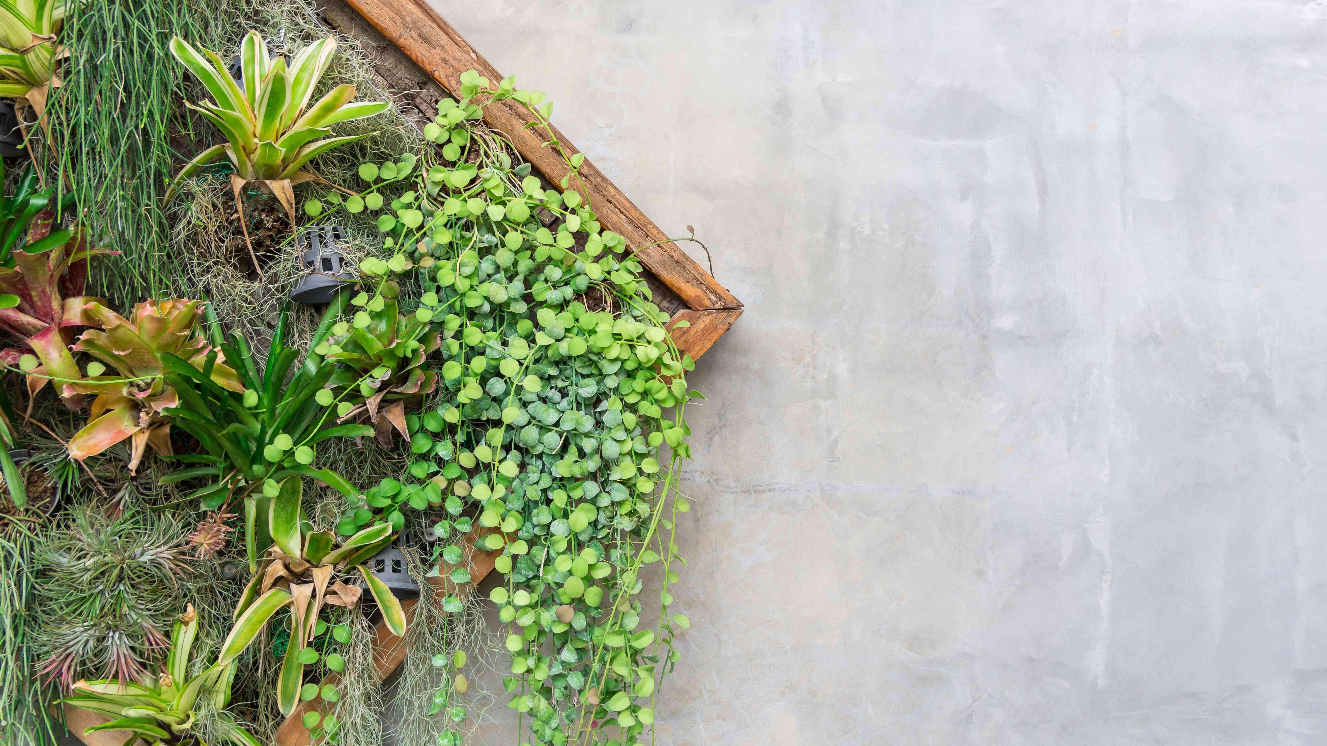 Cómo confeccionar un cuadro vegetal