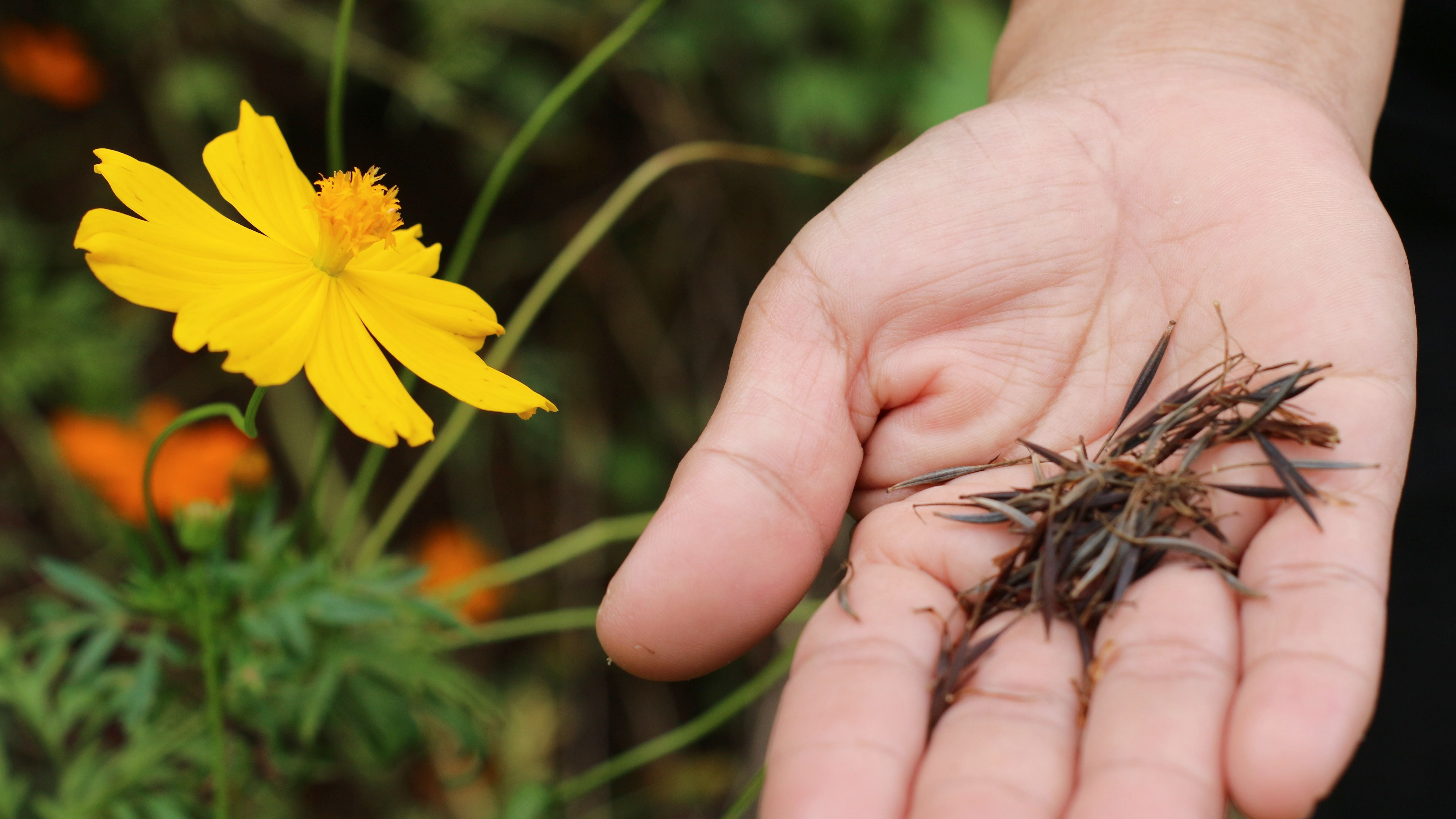 Comment choisir  ses fleurs à semer