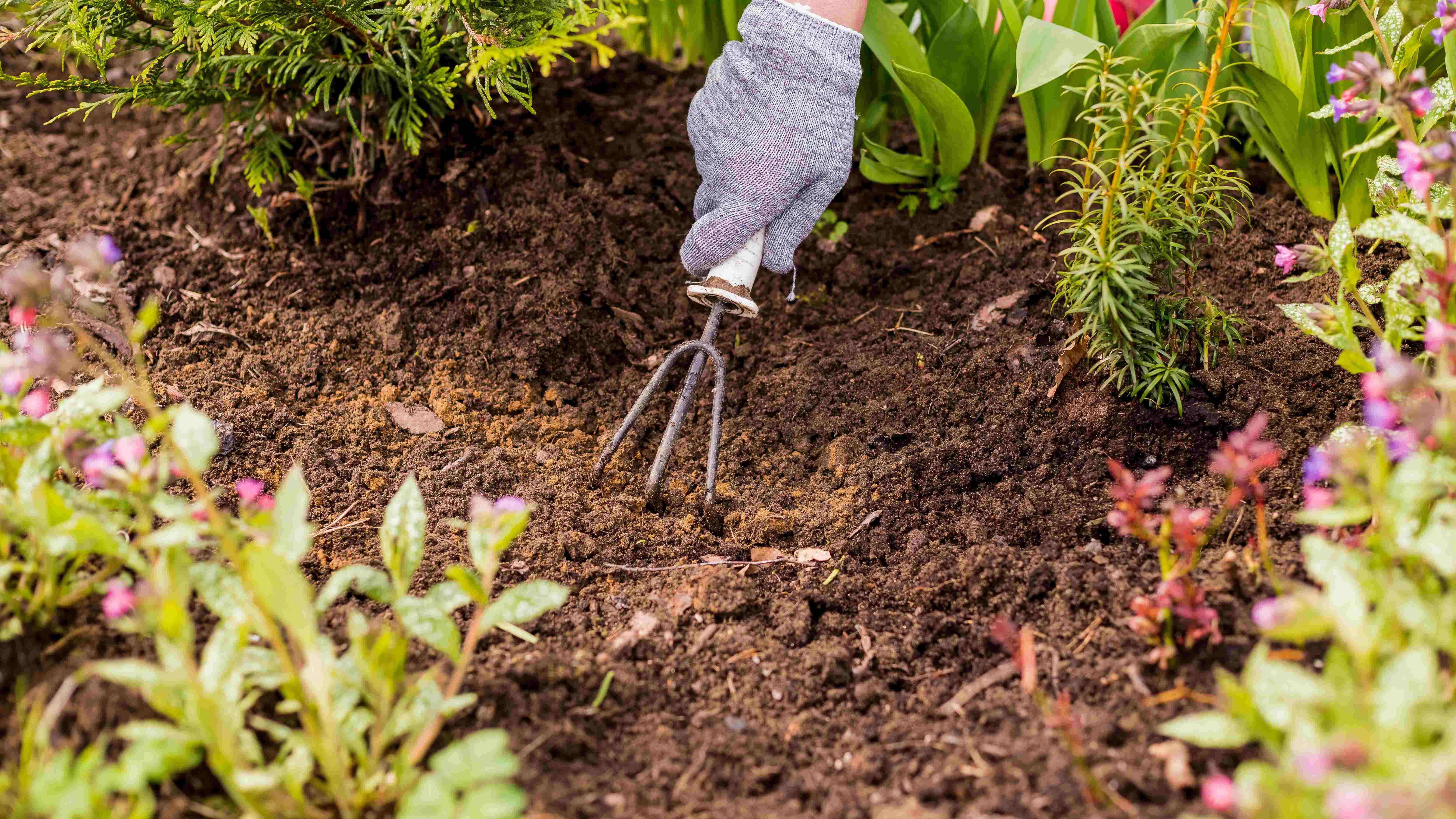 Come preparare il giardino in primavera